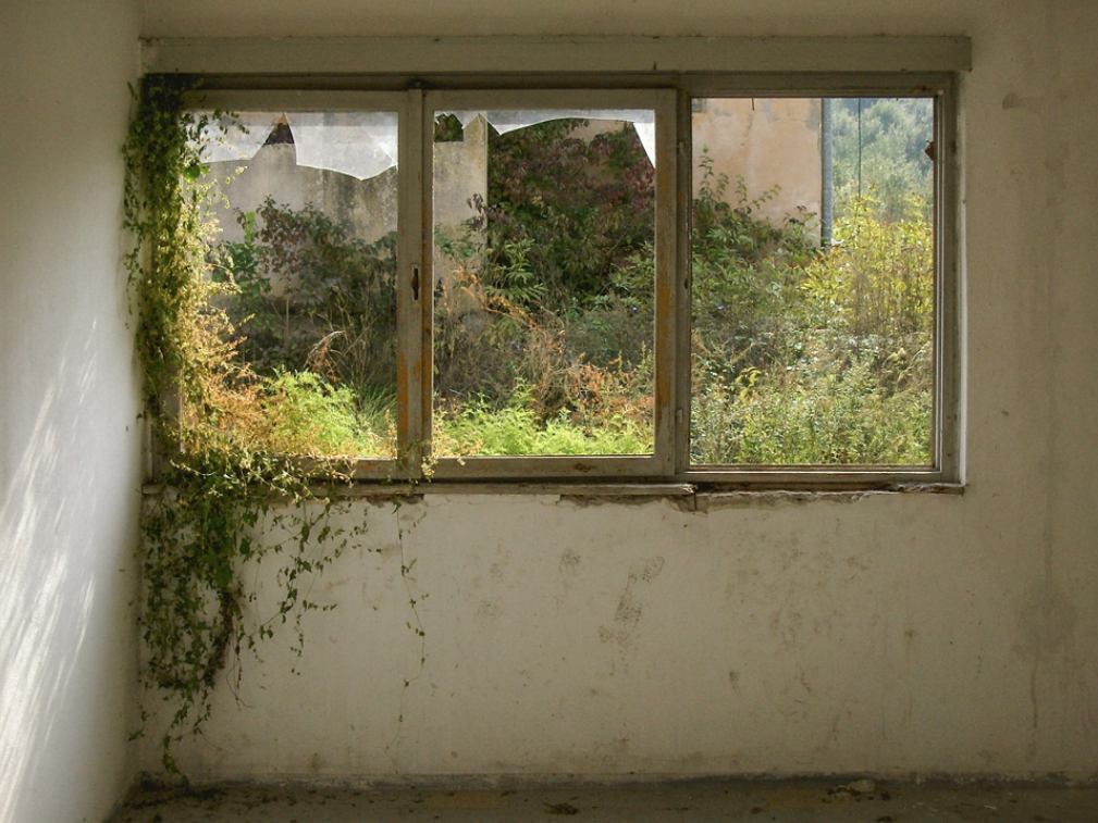 02- DanijelaPruginic-Nature reclaims.png