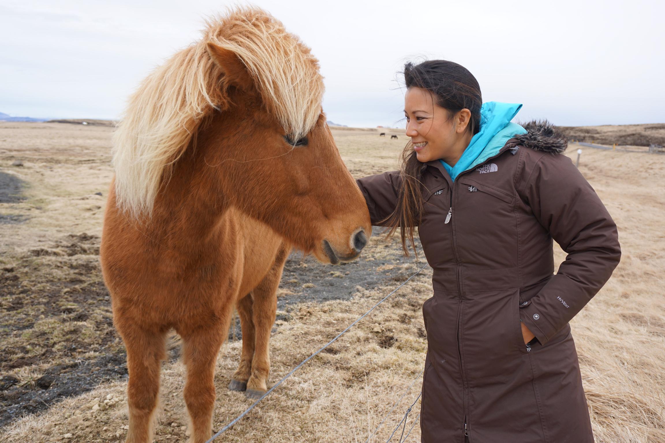 Chasing-the-Northern-Lights-Chasing-A-Sun-Angela-Sun-Icelandic-Ponies-1.JPG