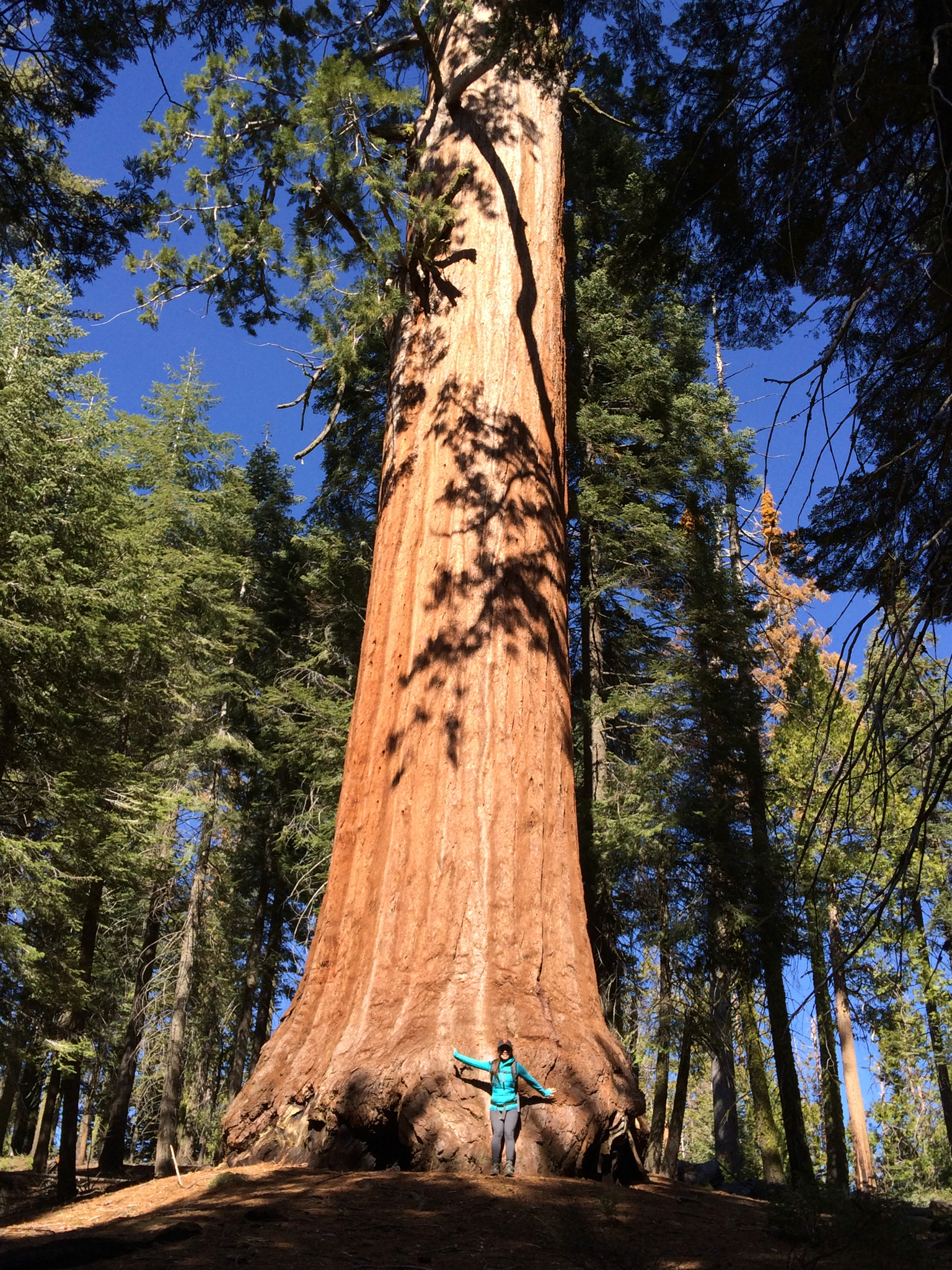 National-Parks-You-Must-See-Sequoia-National-Park-1.JPG