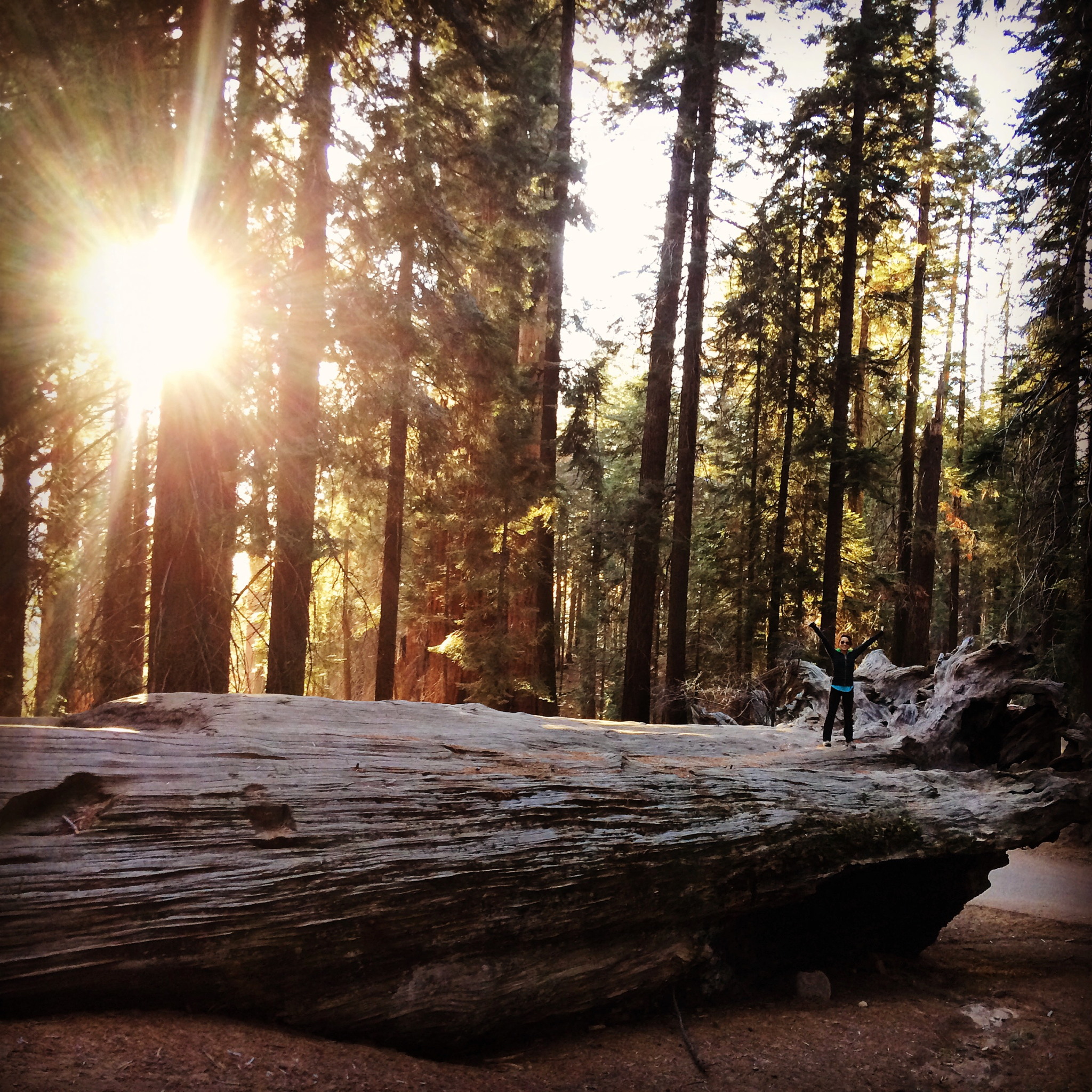 National-Parks-You-Must-See-Sequoia-National-Park-2.JPG