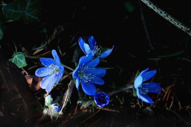 nature-3220422_640.jpg