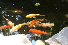 One water feature in Miller Garden