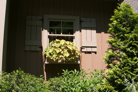 Heuchera grace a window box at the Camprini Garden