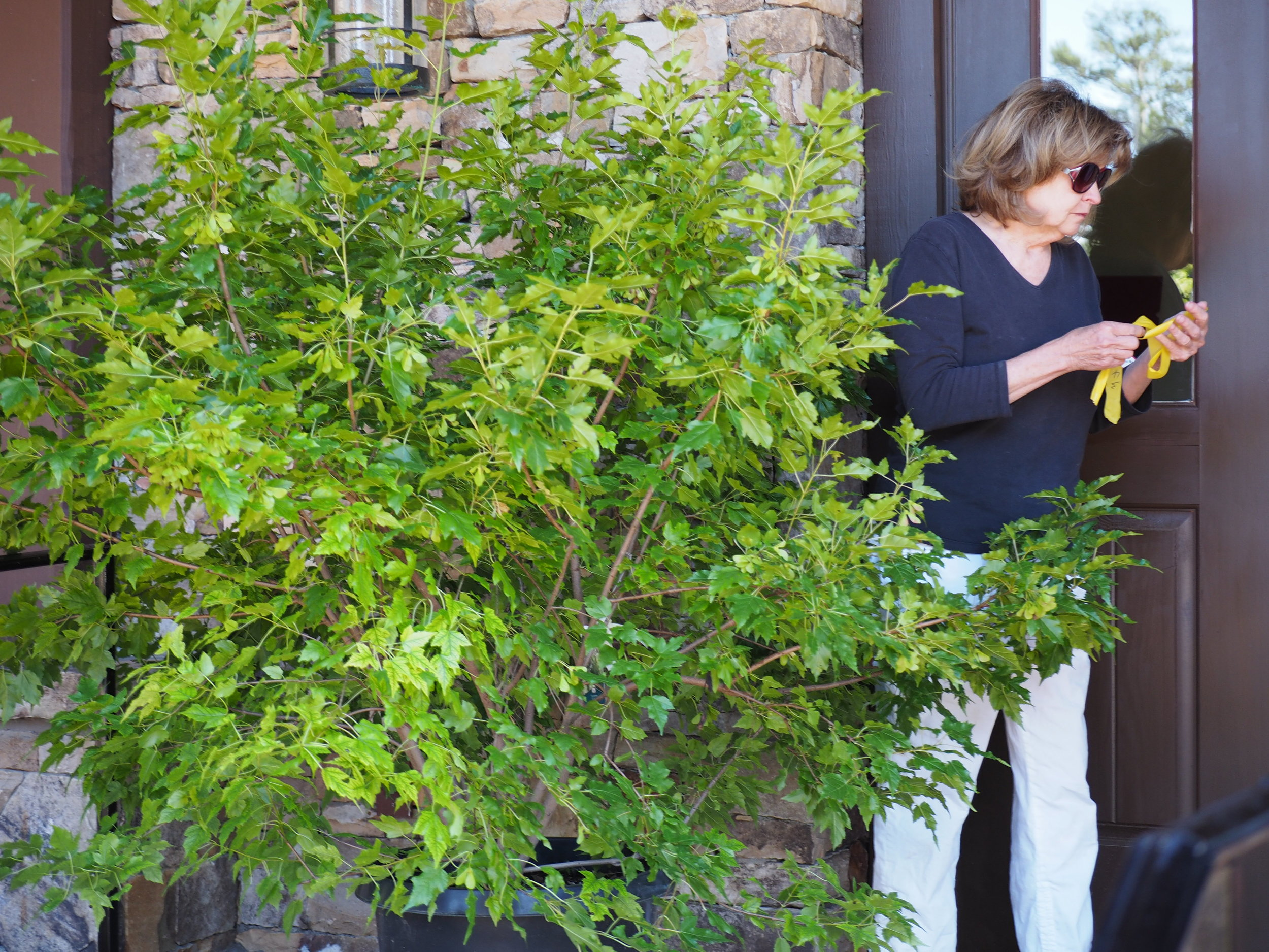 Fran Holman McKenzie checks one of the beautiful shrubs used to create the 	indoor garden.