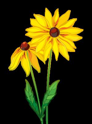 Club Flower - Blackeyed Susan