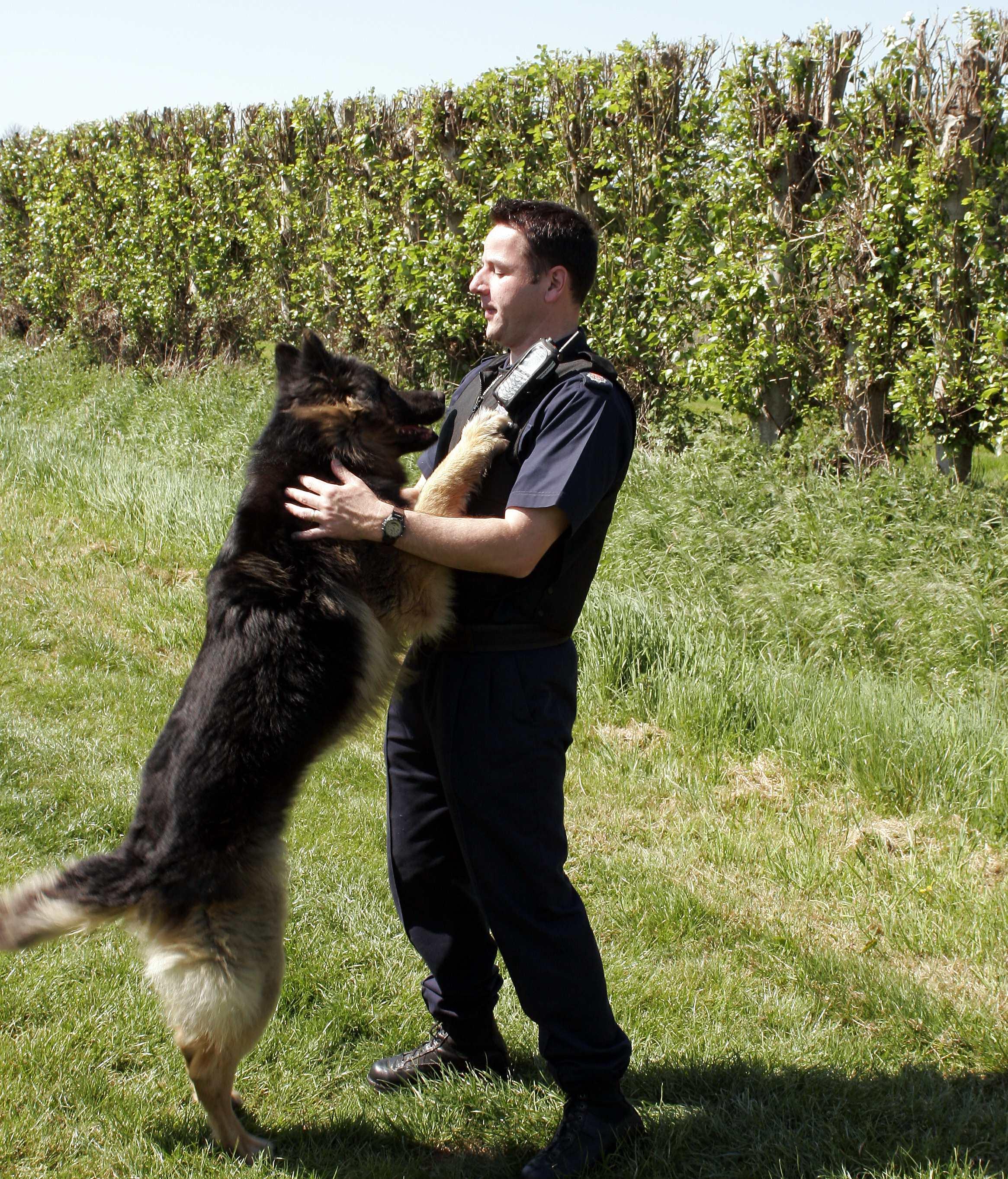 SA0105072_2 dog.jpg