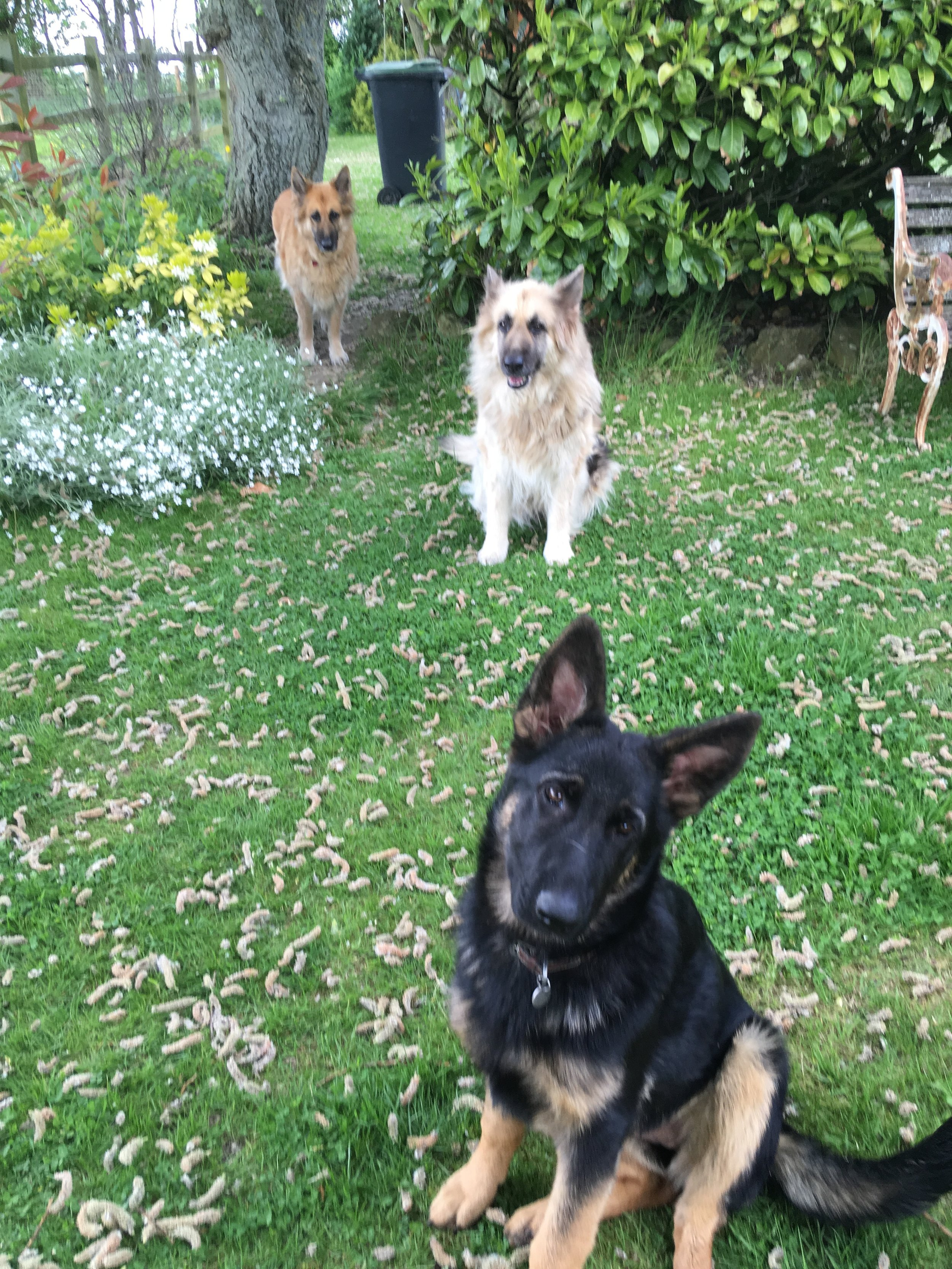 Marney with Mabel and Molly