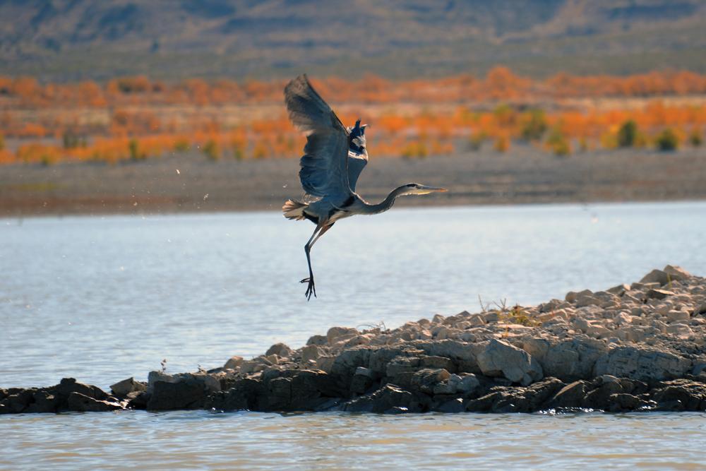 Bird watching at Elephant Butte Lake