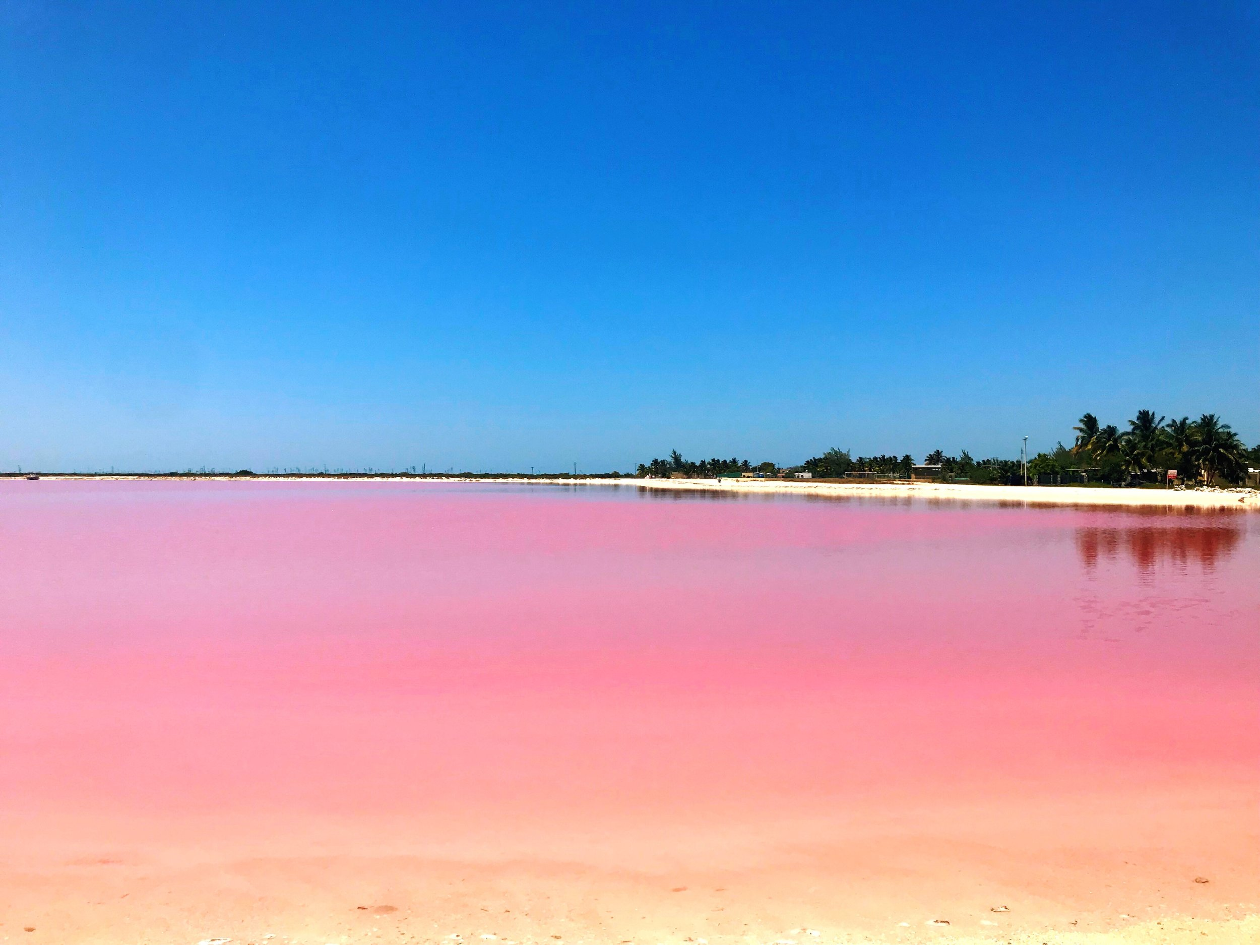 A Day Trip To Las Coloradas From Tulum With Kids — Negra Bohemian