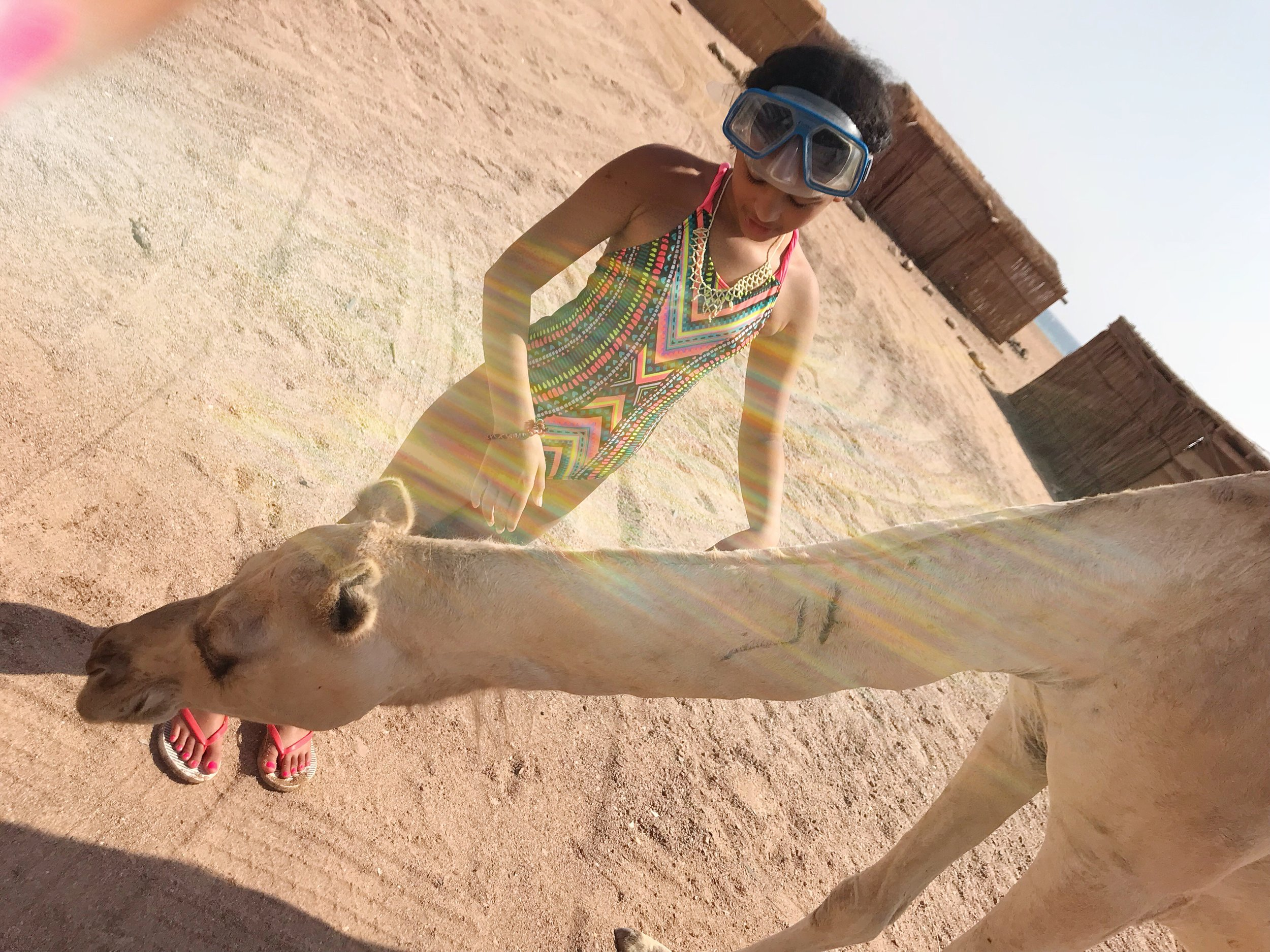 Ras Abu Galum, Egypt