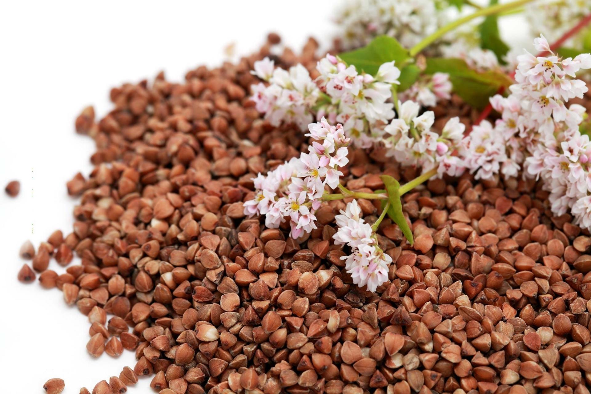 buckwheat-poisoning.jpg