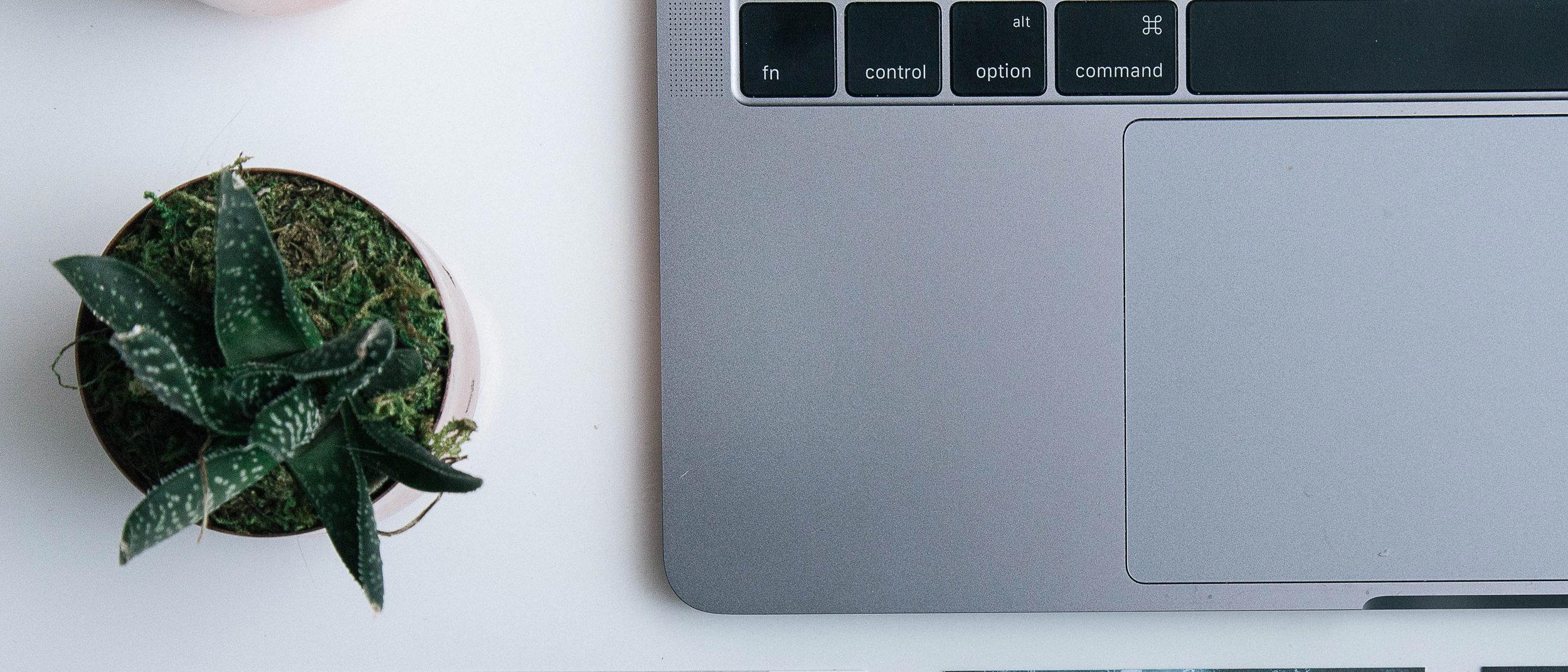 Laptop und Pflanze