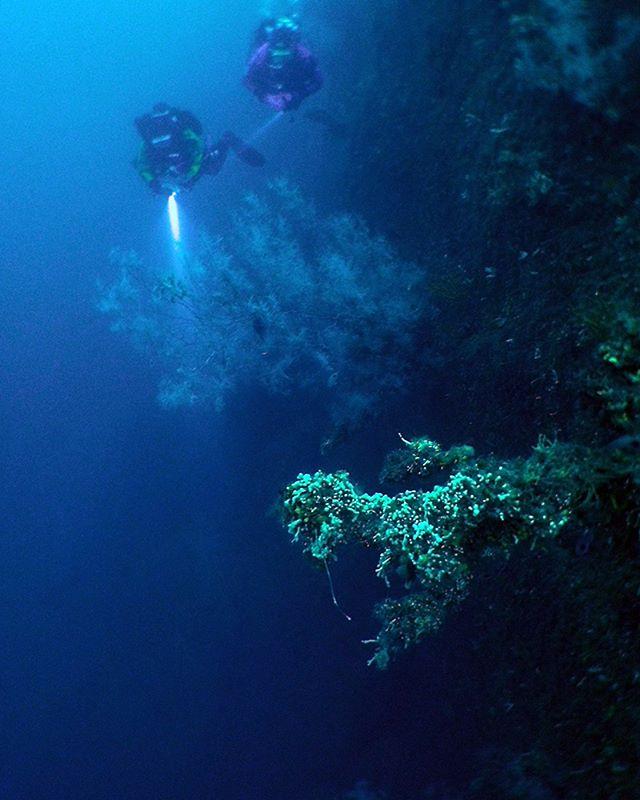 Milford Sound wall diving with Scuba Force drysuit divers Hans and Simone. Just a little bit of depth on offer! . . . . . #milfordsound #fiordland #mustdonz #newzealand #nz #awakentheexplorer #southisland #scubadiving #nzmustdo #scubaforce #blackcorals