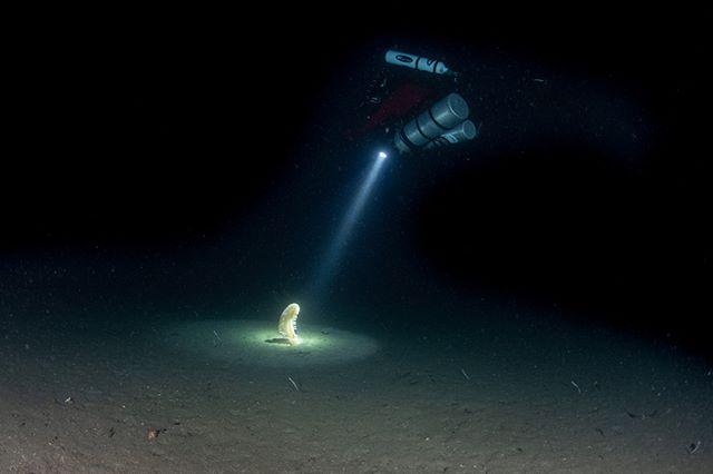 Sea pen hunting in Milford Sound.  Pic @ianskip1 - SF2 rebreather diving . . . . #sf2 #milfordsound #fiordland #awakentheexplorer #divenewzealand #paditv🐋🐟🐬 #diving #scubadiving #scubaforce #travel #milfordsoundnz #nature #ocean #sea #nz #underwaterphotography #technicaldiving #newzealanddiving