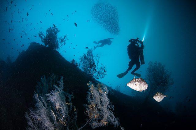 Milford Sound Rebreather Diving.  Photography @ianskip1 . . . . #awakentheexplorer #rebreather #milfordsound #fiordland #milfordsoundnz #newzealanddiving #divenewzealand #diving #paditv🐋🐟🐬 #scubadiving #scubaforce #sea #ocean #nz #nature #underwaterphotography #southislandnz #technicaldiving #blackcoral #travel #scubadivingmag #scubadive