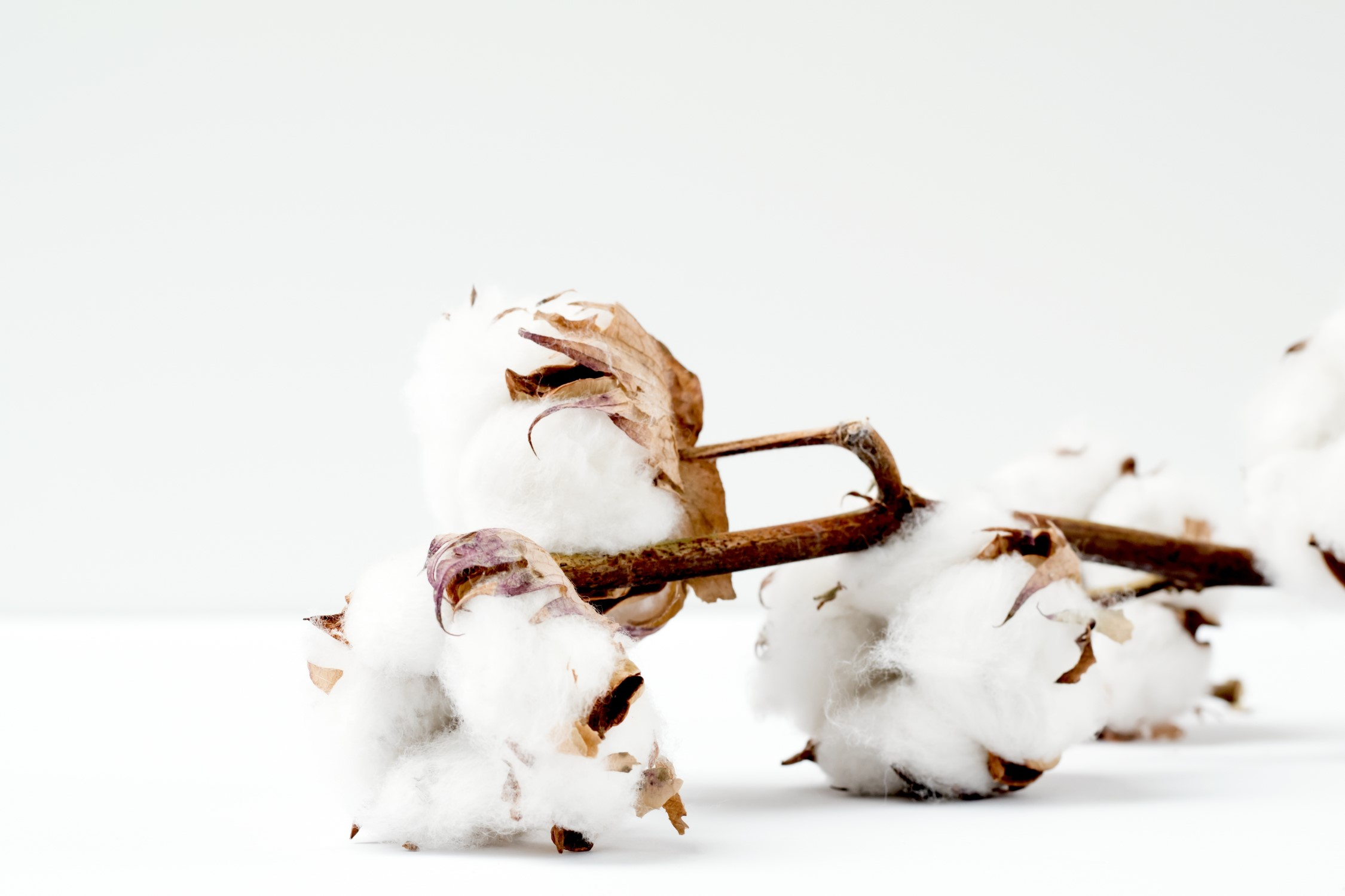 cotton unsplash.jpg