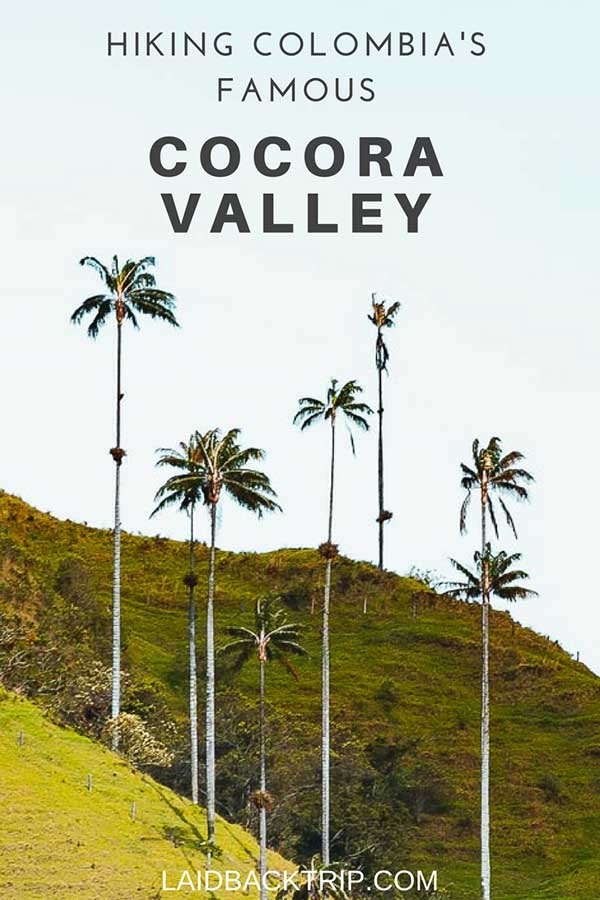 Hiking Guide to Cocora Valley, Colombia