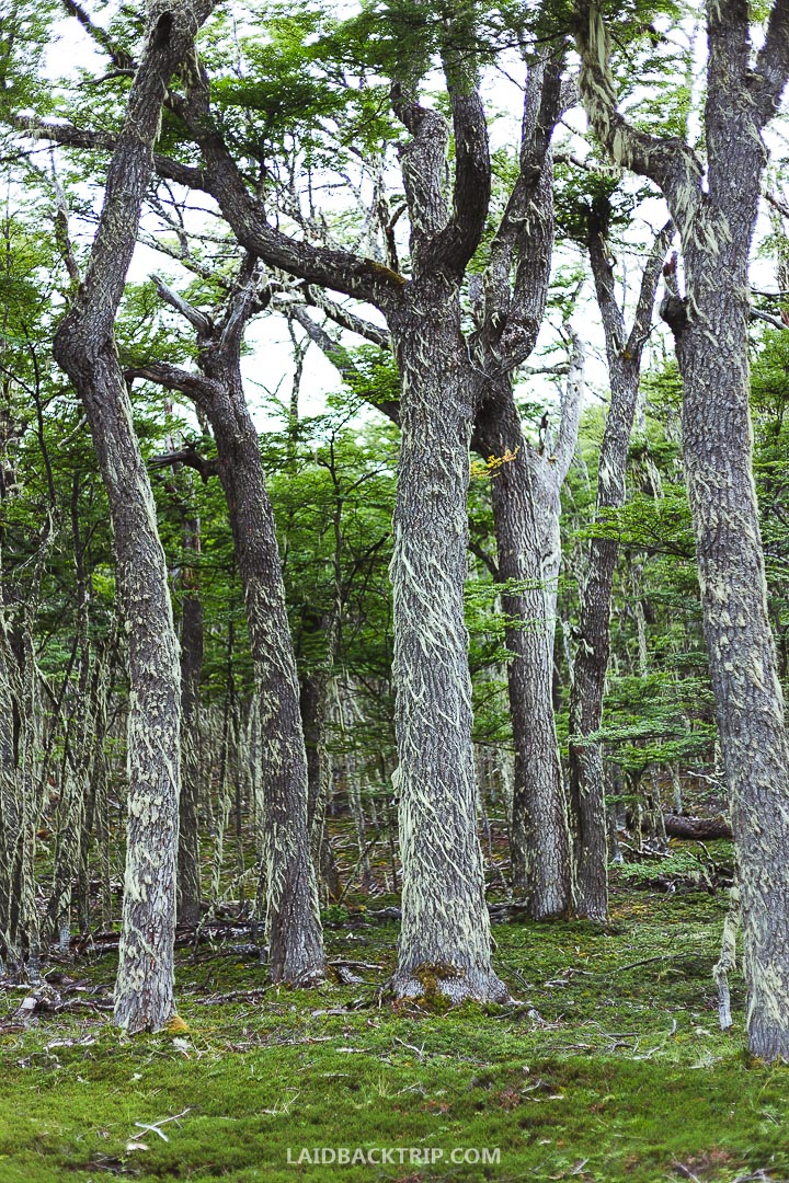 You will climb through a forest with old trees, around the mountain lakes to the top to see the stunning Valle Chacabuco and the Patagonia National Park in all its beauty.