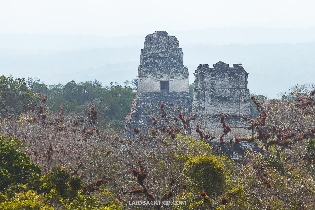 Tikal ruins are an amazing historical site in Guatemala.
