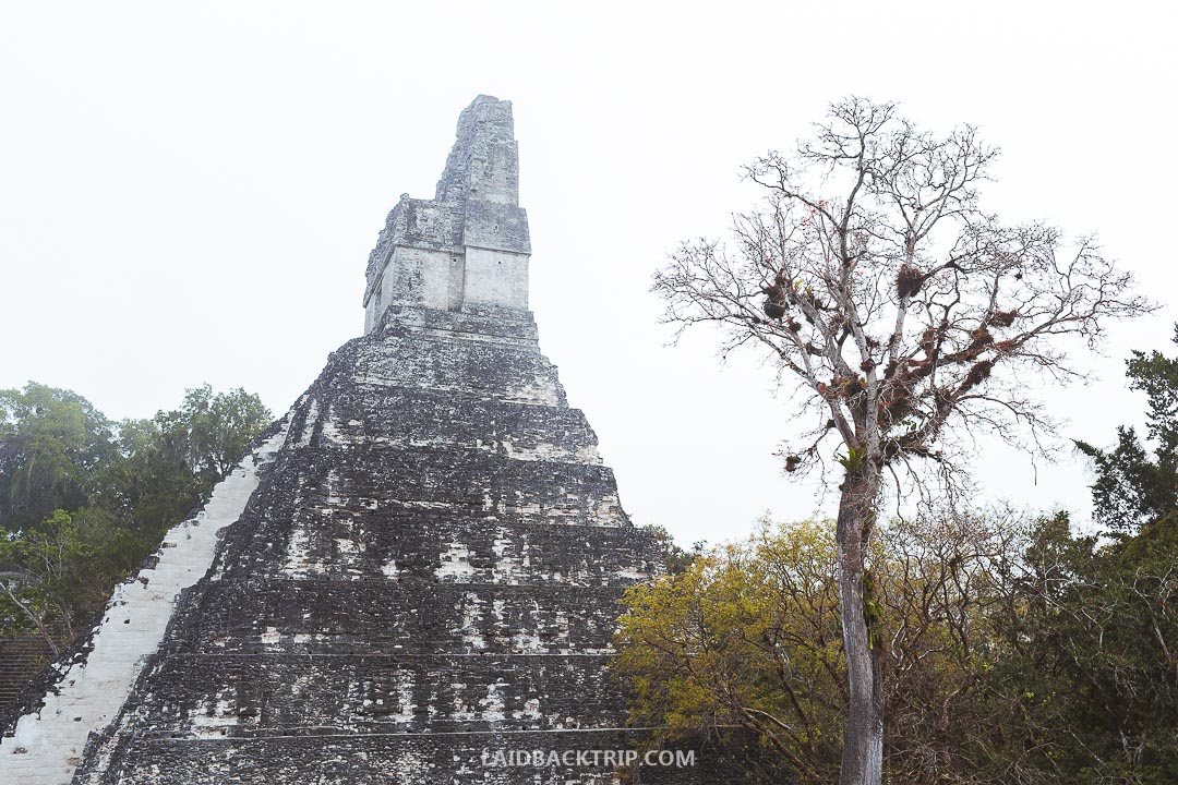Yo don't need a guide to explore the Tikal ruins.