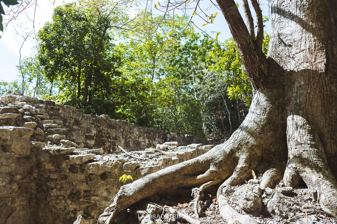 Coba Ruins are stunning and filled with Mayan history.