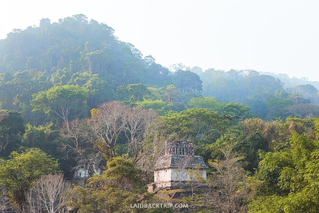 You can get to Palenque ruins by public transport called Colectivo or take a taxi.