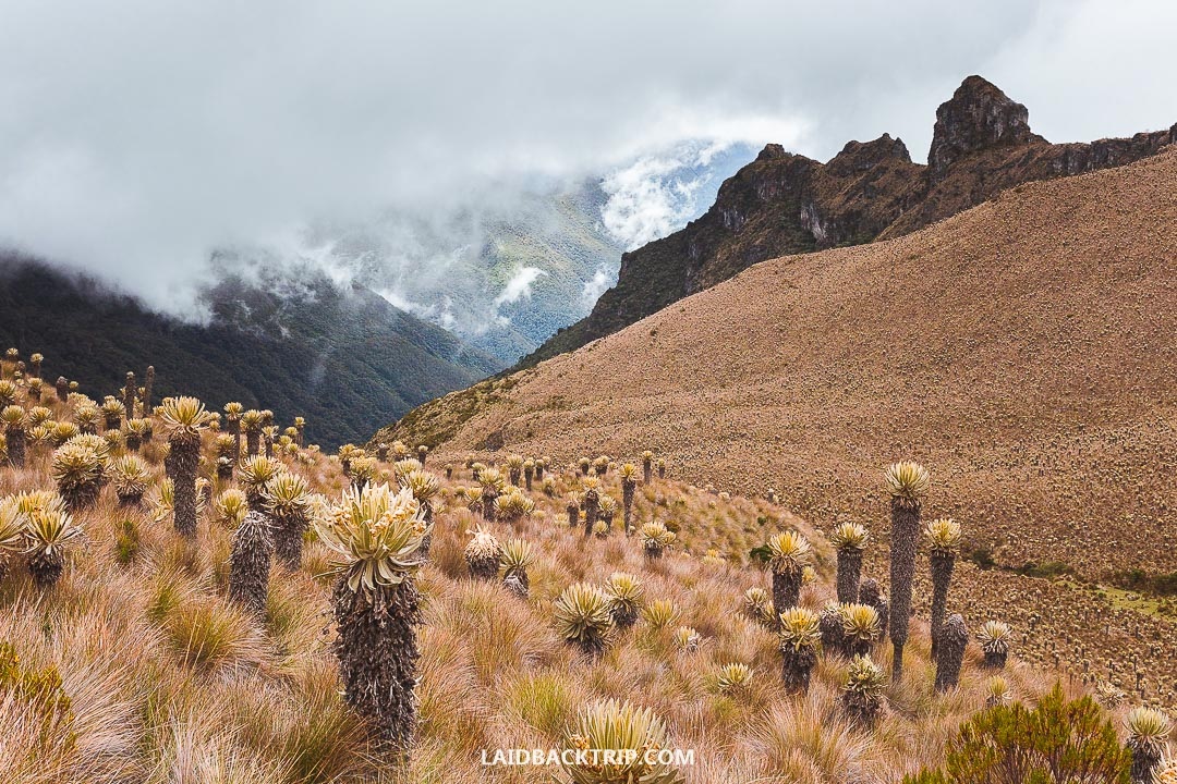 Weather changes every day in South America especially in the Andes mountains.