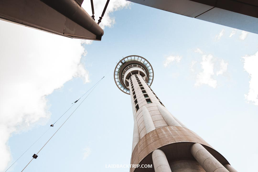 You can do the Sky Walk adrenaline activity in Auckland Tower.