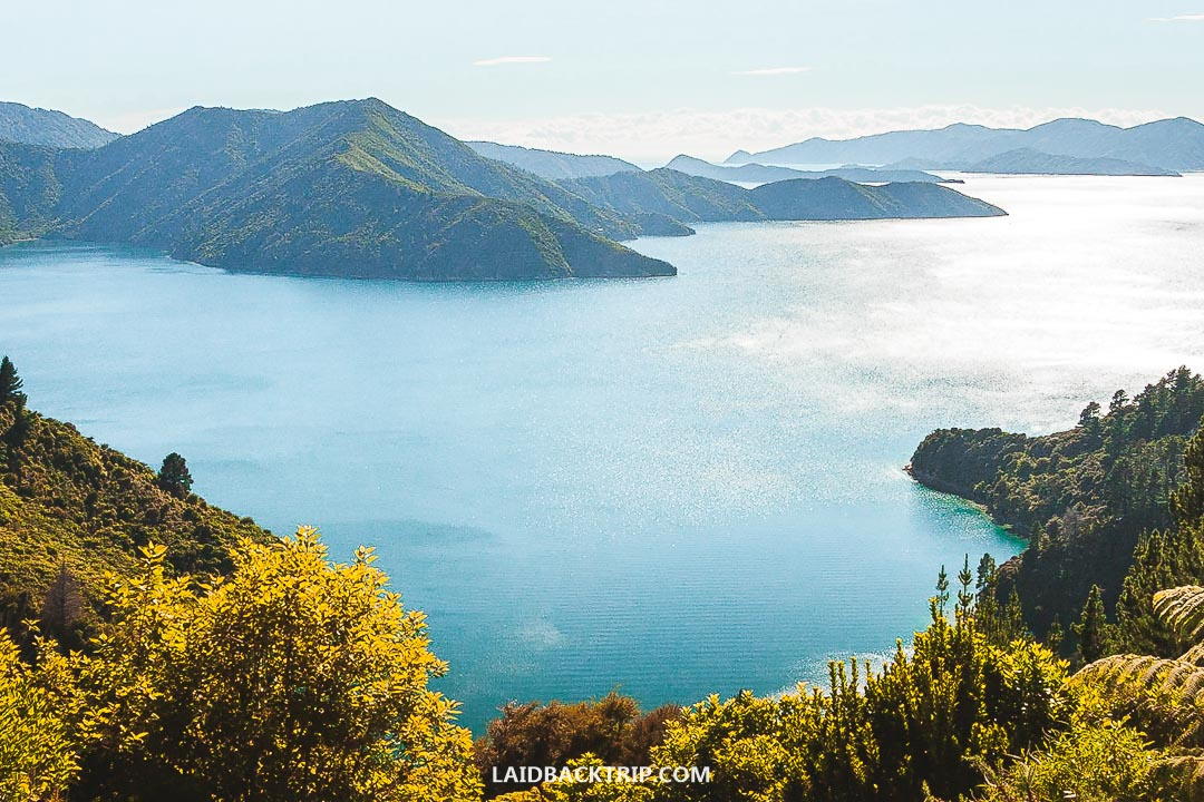 Queen Charlotte Track is one of the best multi-day treks in New Zealand.