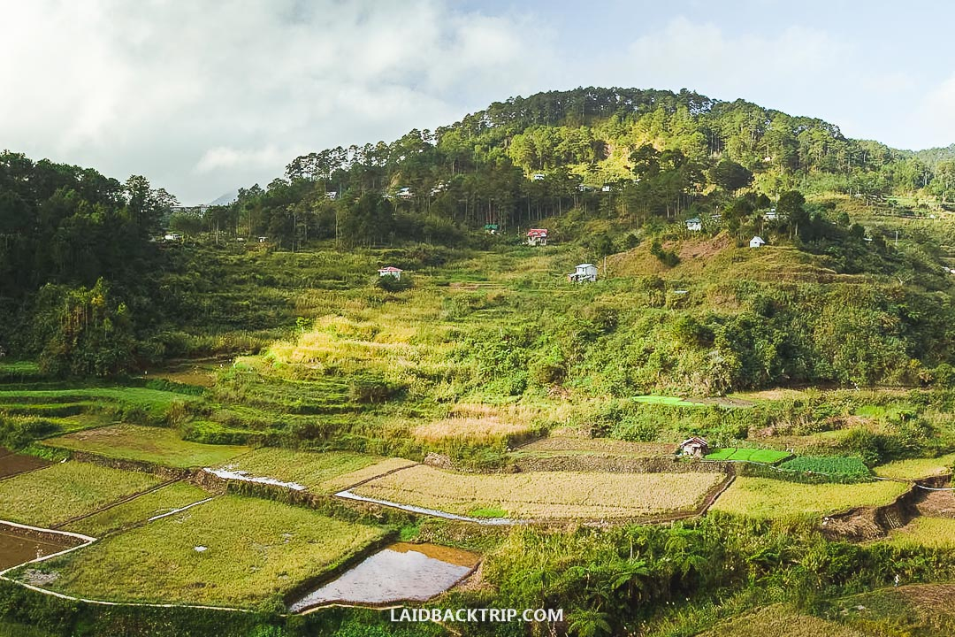 You can explore rice terraces in Sagada too.