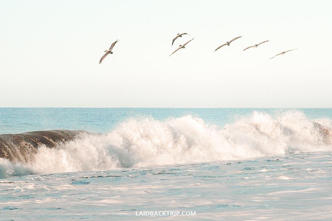 Monterrico has a beautiful long black sand beach.