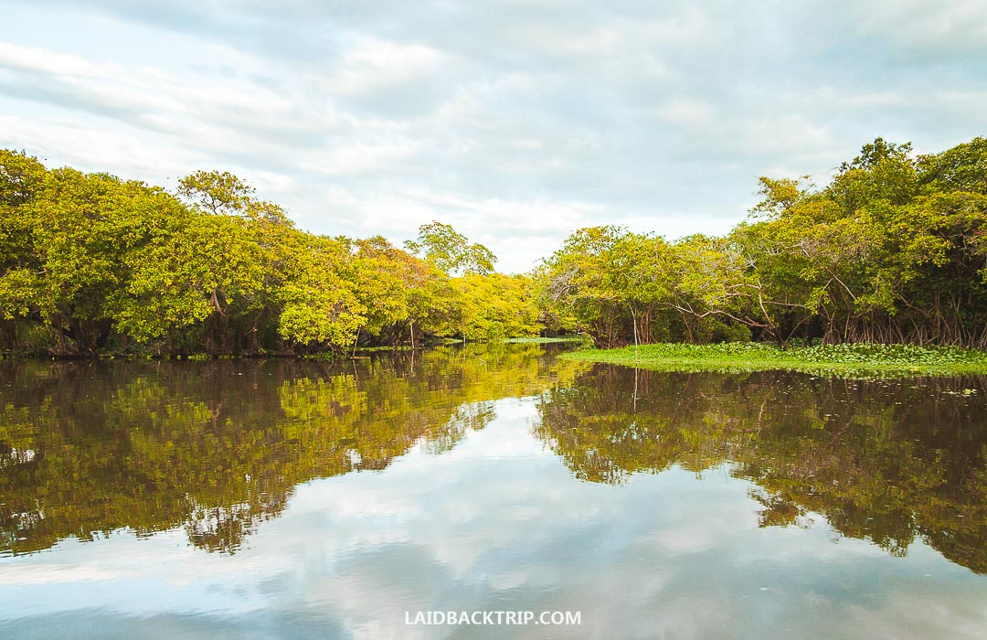 You can explore Monterrico estuary on a guided boat tour around the mangroves.
