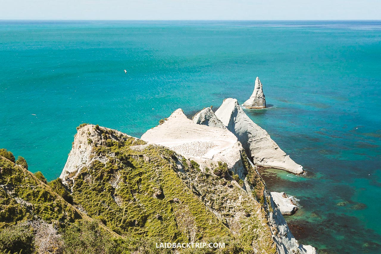 Visit a Gannet bird colony by walking Cape Kidnappers Track from Napier.