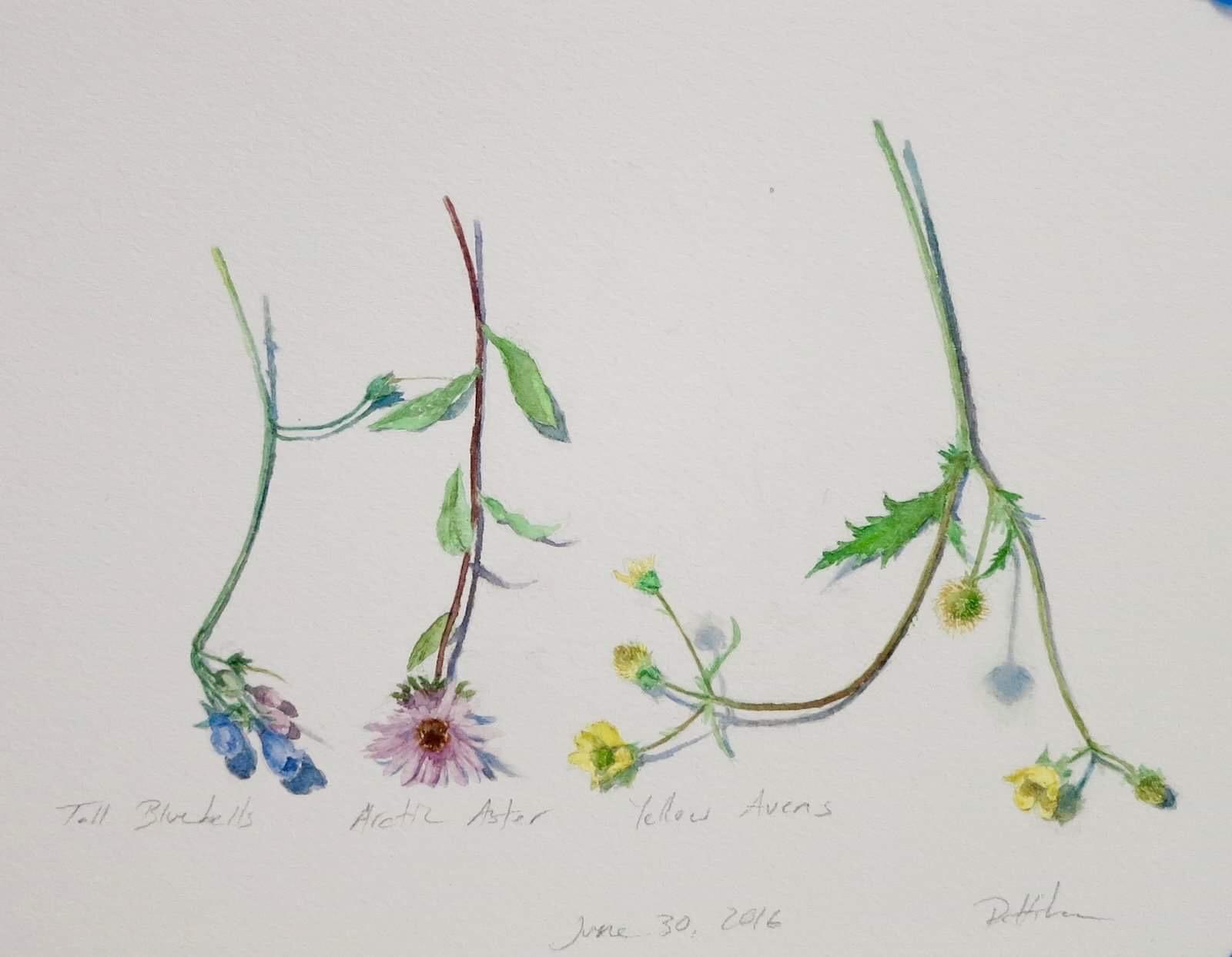 June 30th Wildflowers