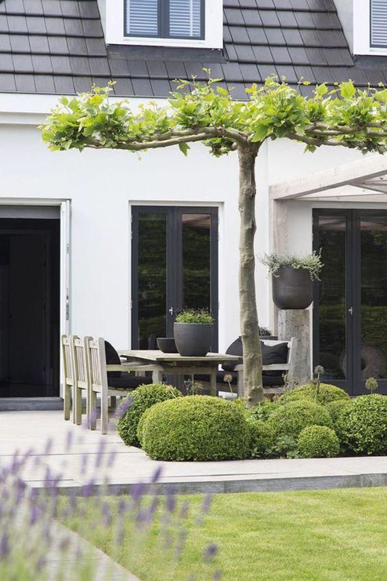 Backgarden design ideas