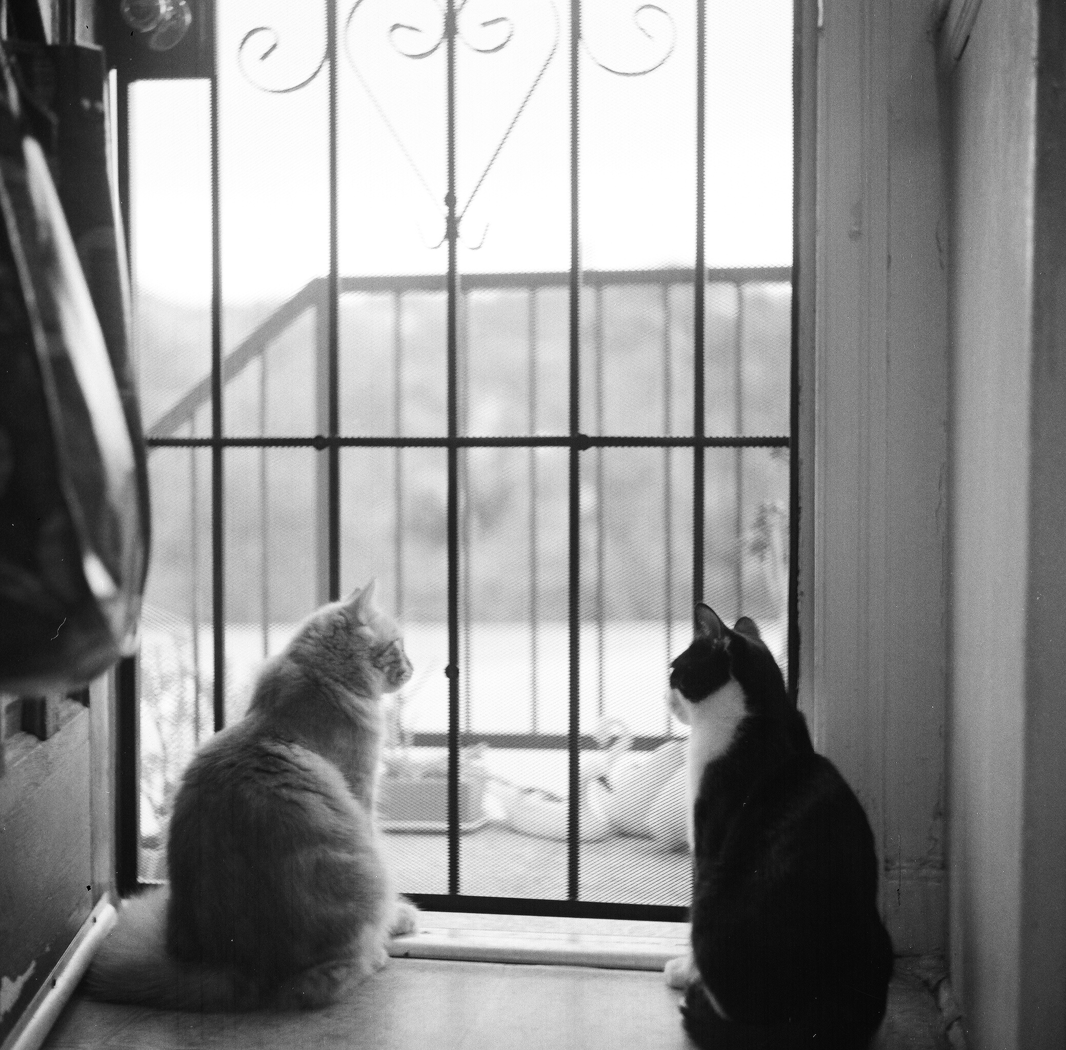 catboys.jpg
