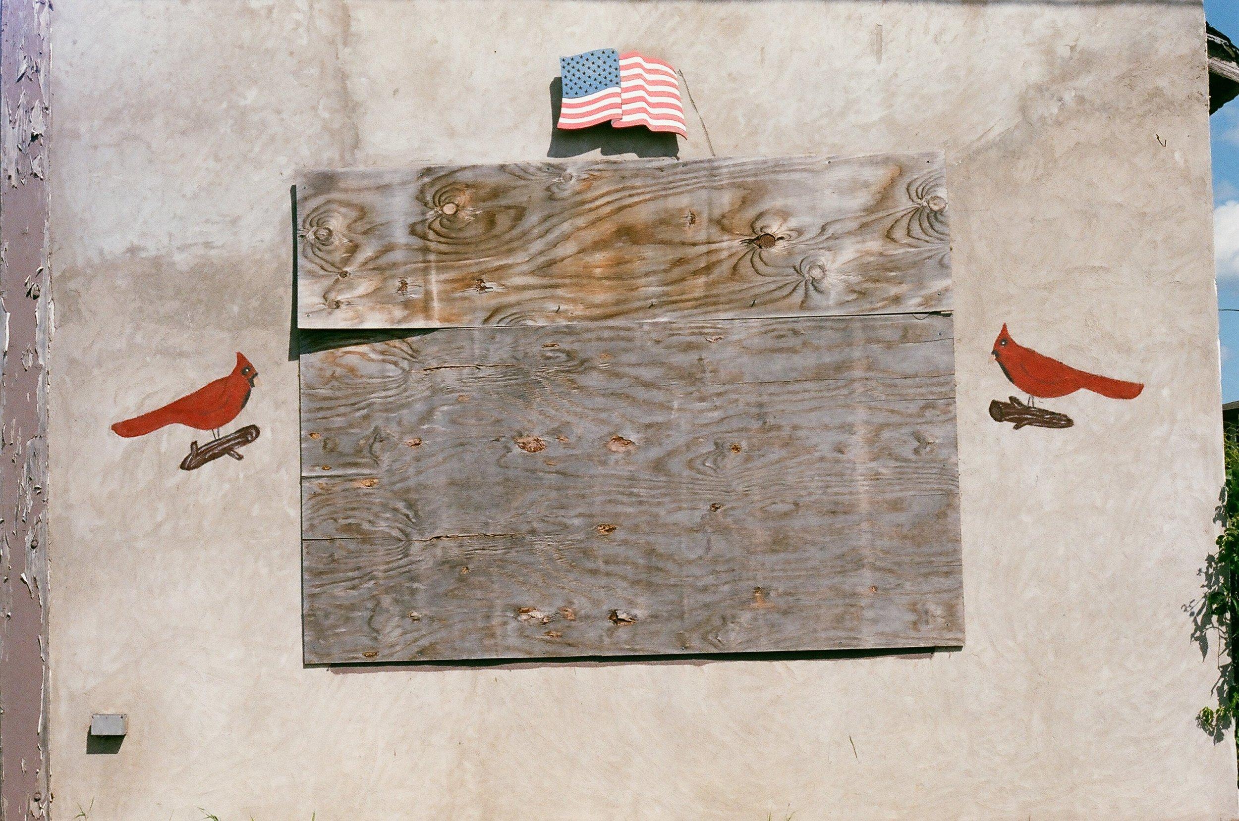 patriotbirds.jpg