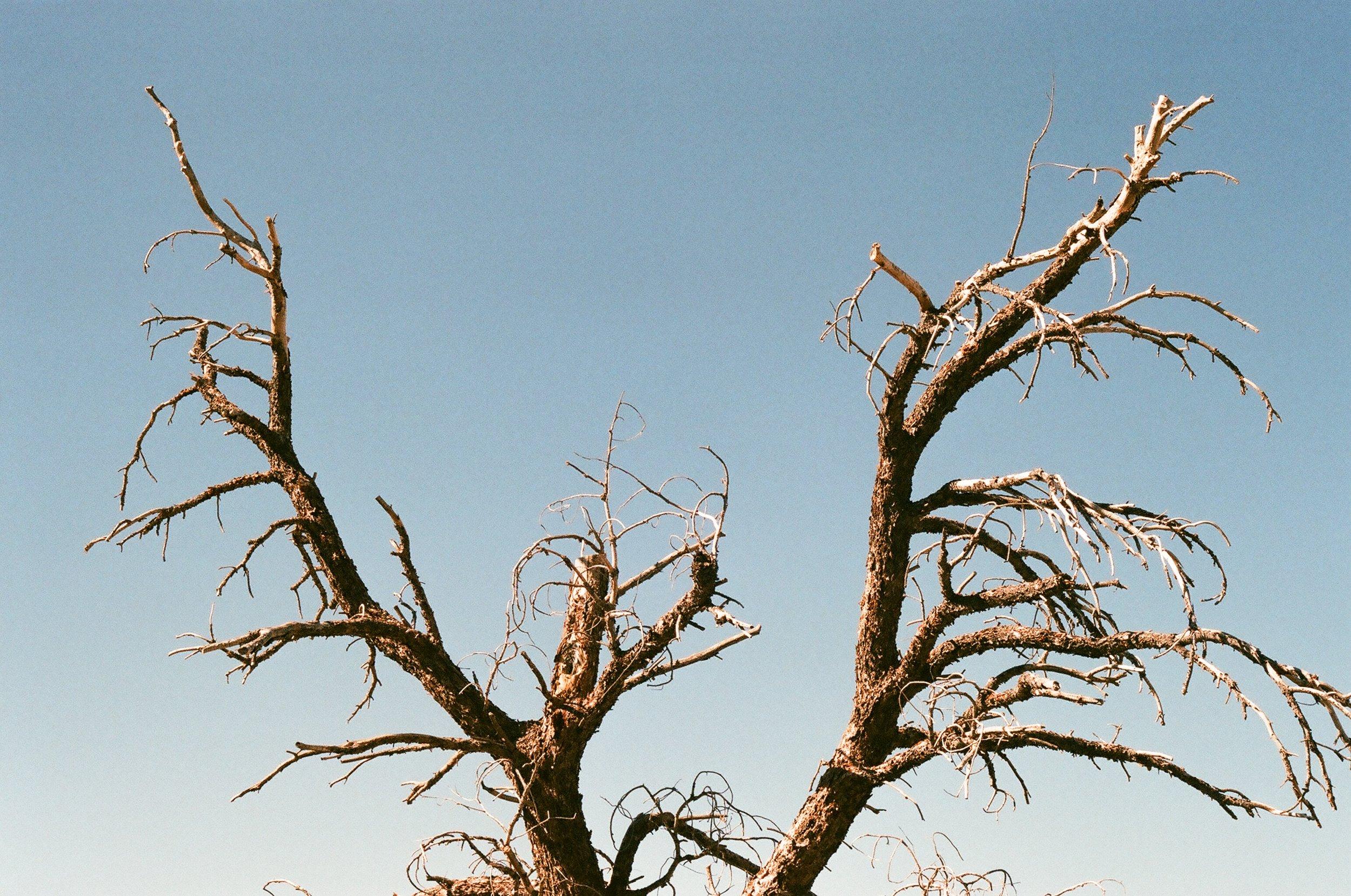 treefork.jpg