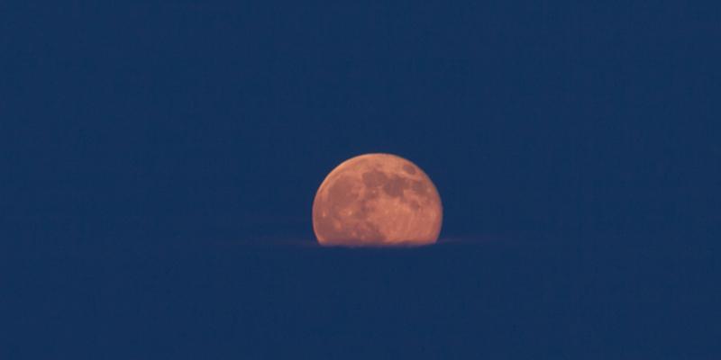 Harvest Moon Paddle v1.jpg