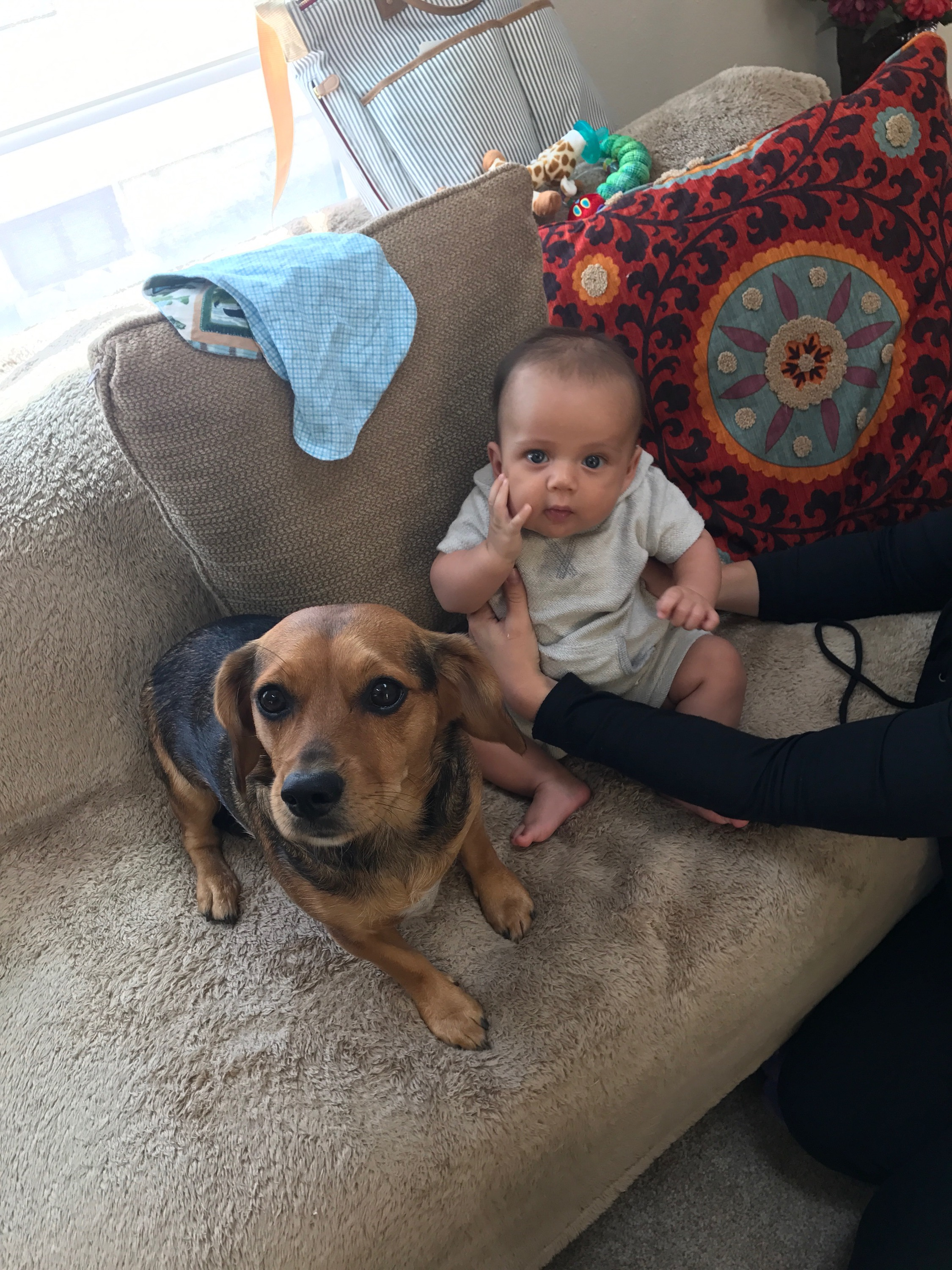 Lilly (my puppy niece) and a baby I don't know