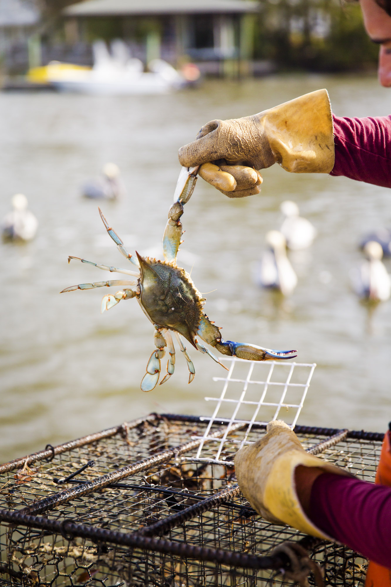beau_kester_savannah_magazine_photographer_crab_lifestyle-24.jpg