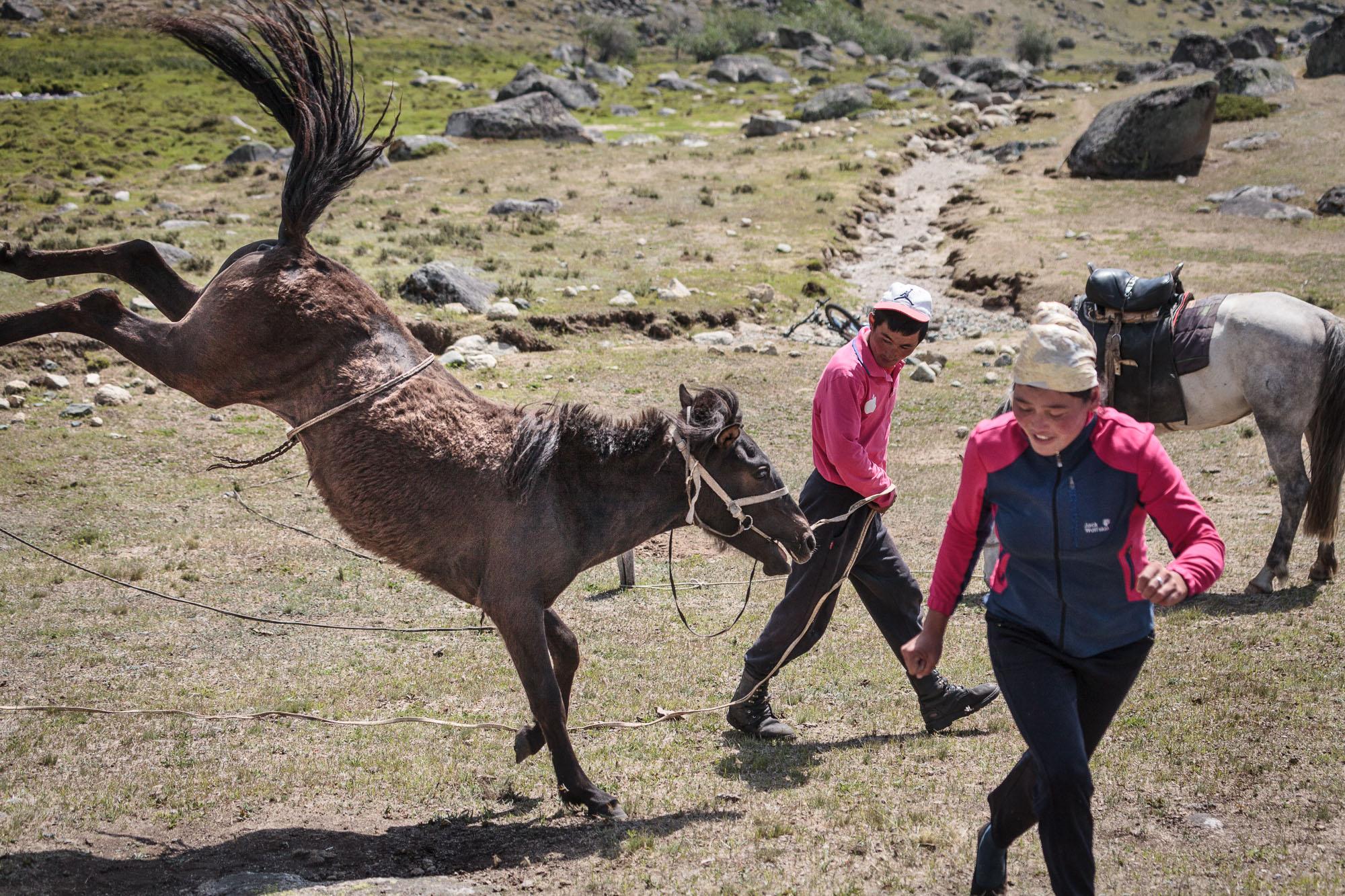 milking horses blog-0777.jpg