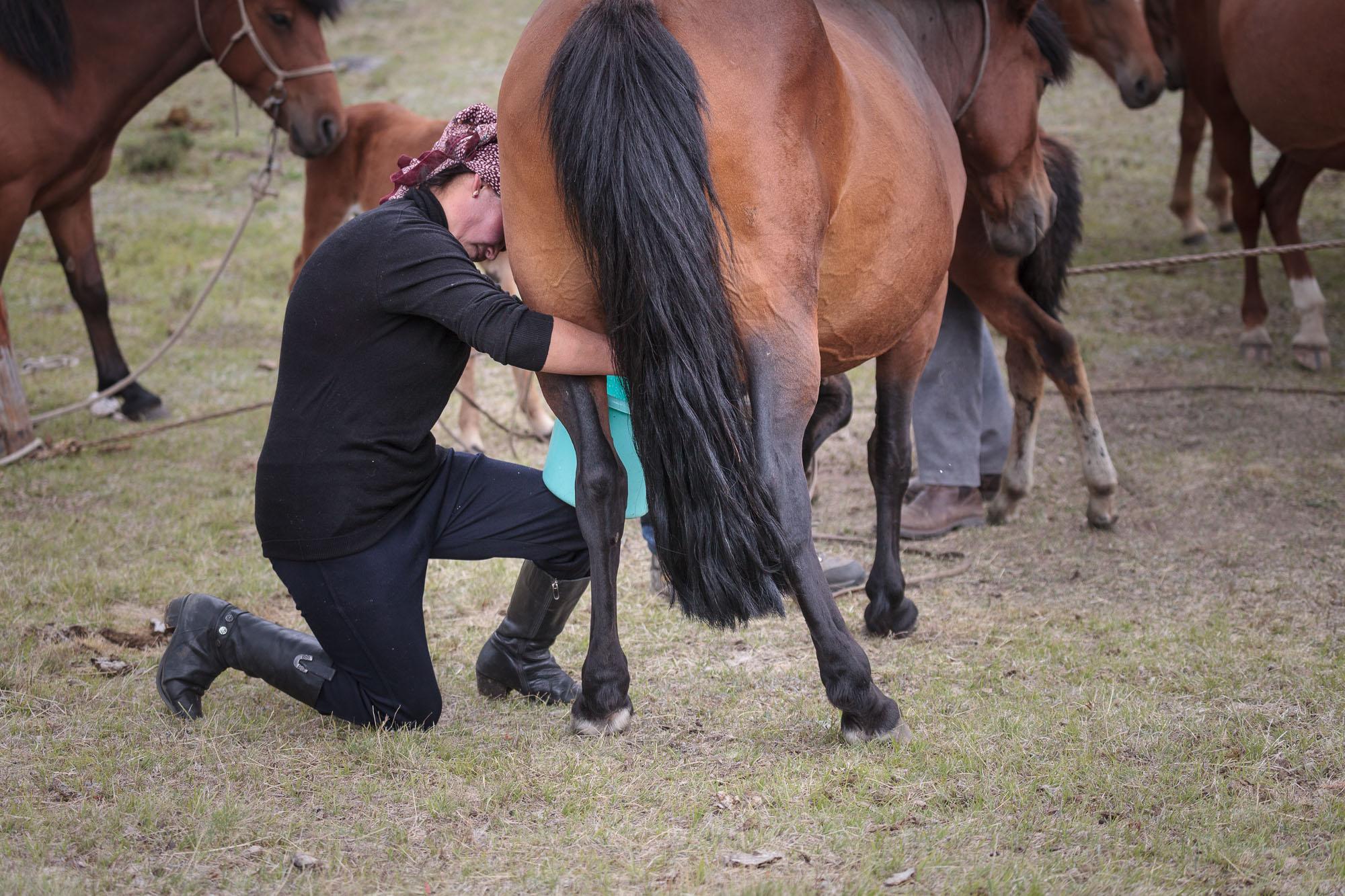 milking horses blog-0835.jpg