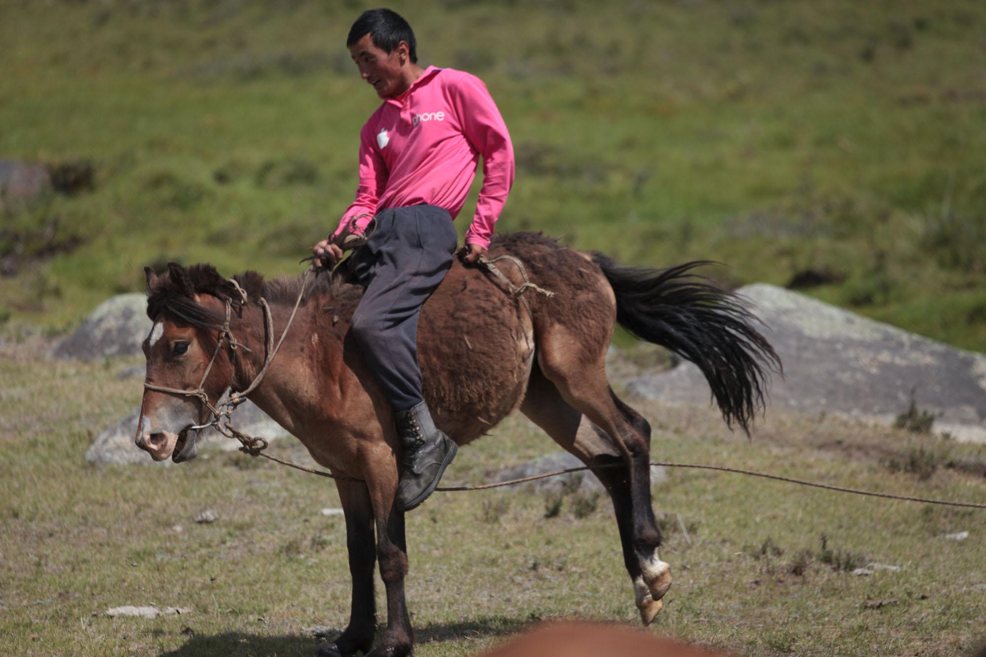 milking horses blog-0824.jpg
