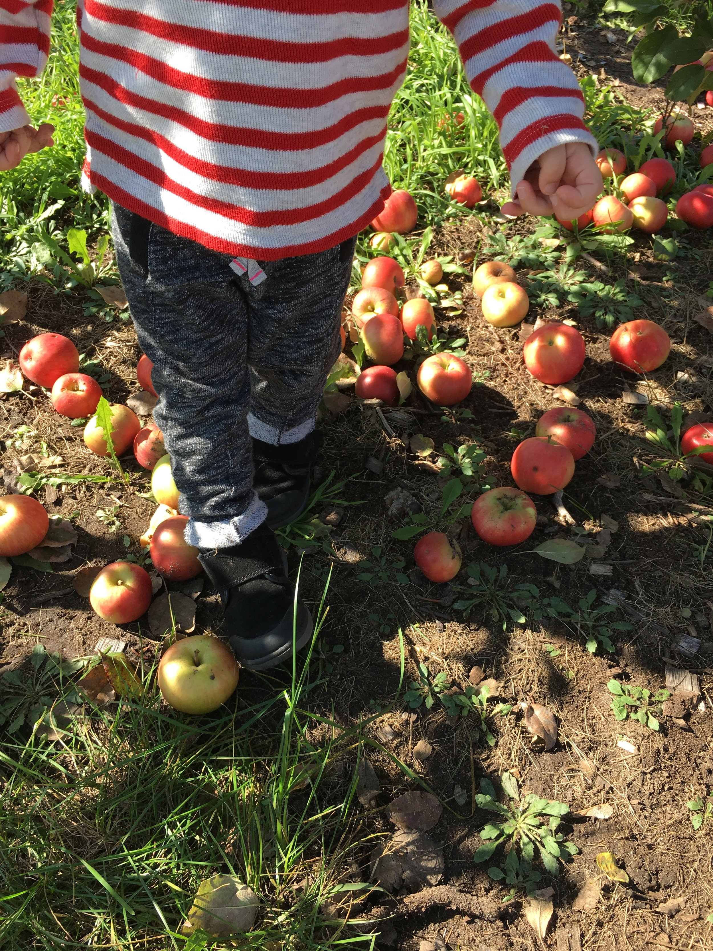 A Trip to the Apple Orchard (IMG_0534)