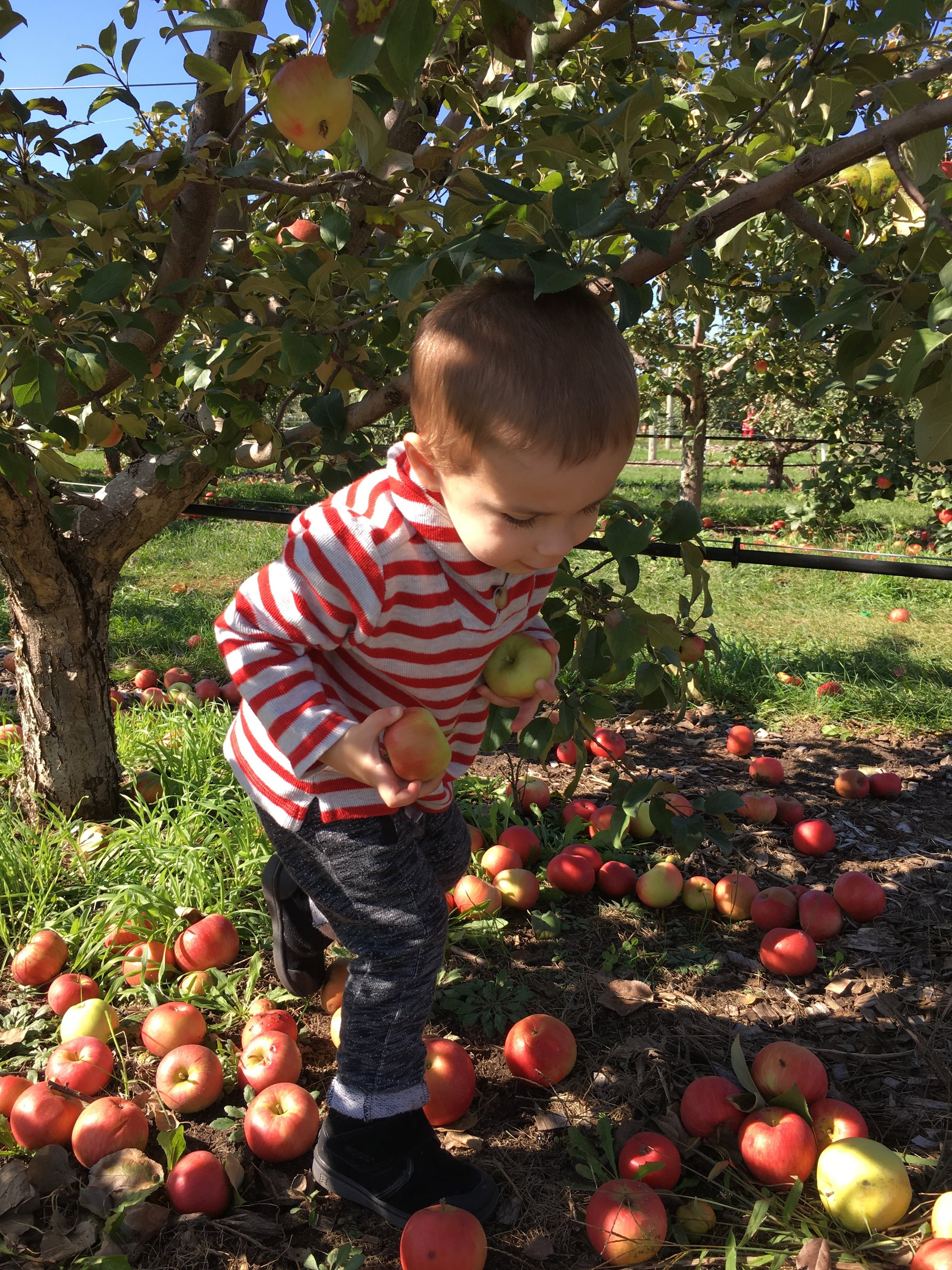 A Trip to the Apple Orchard (IMG_0536)