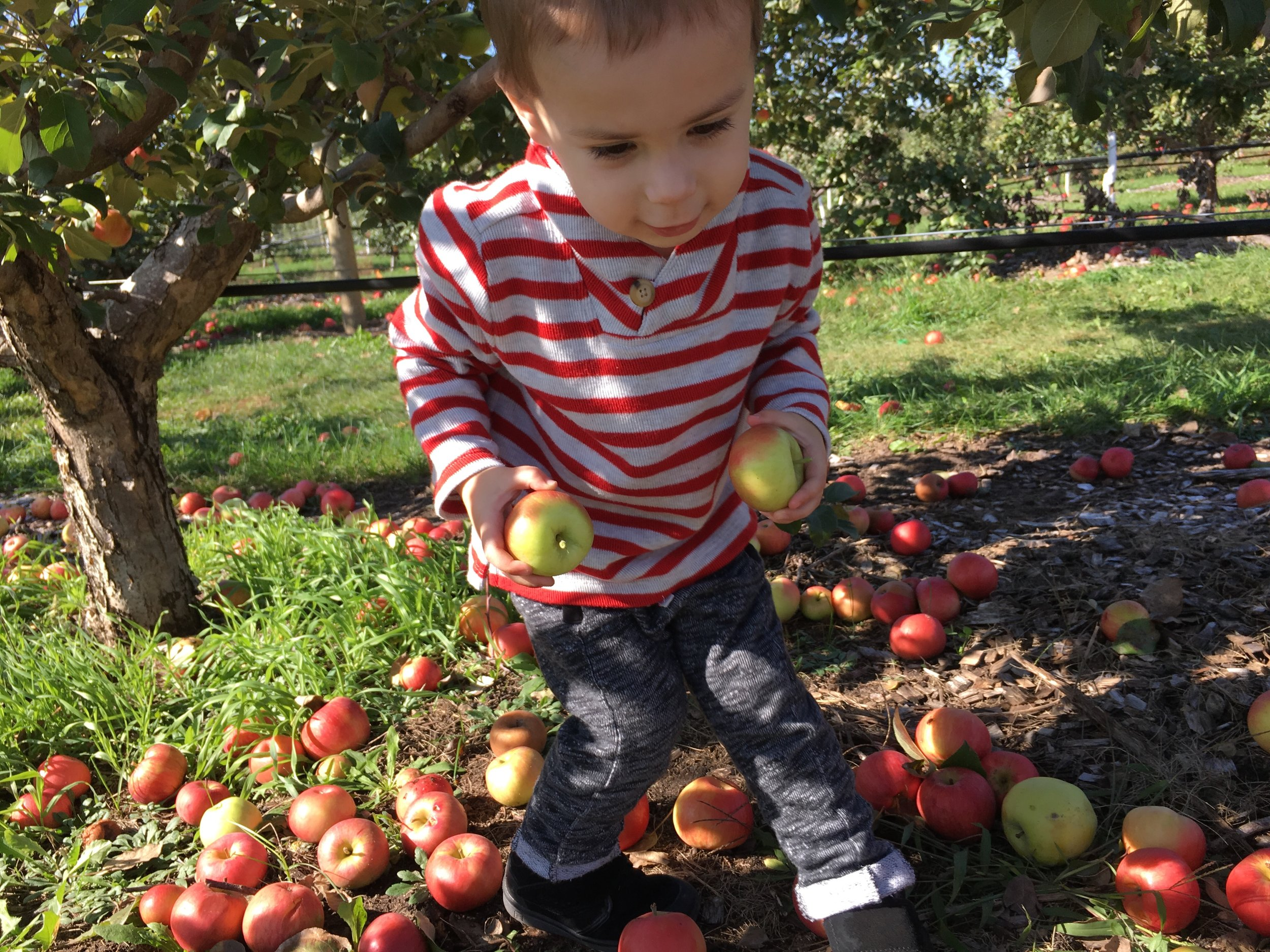A Trip to the Apple Orchard (IMG_0537)