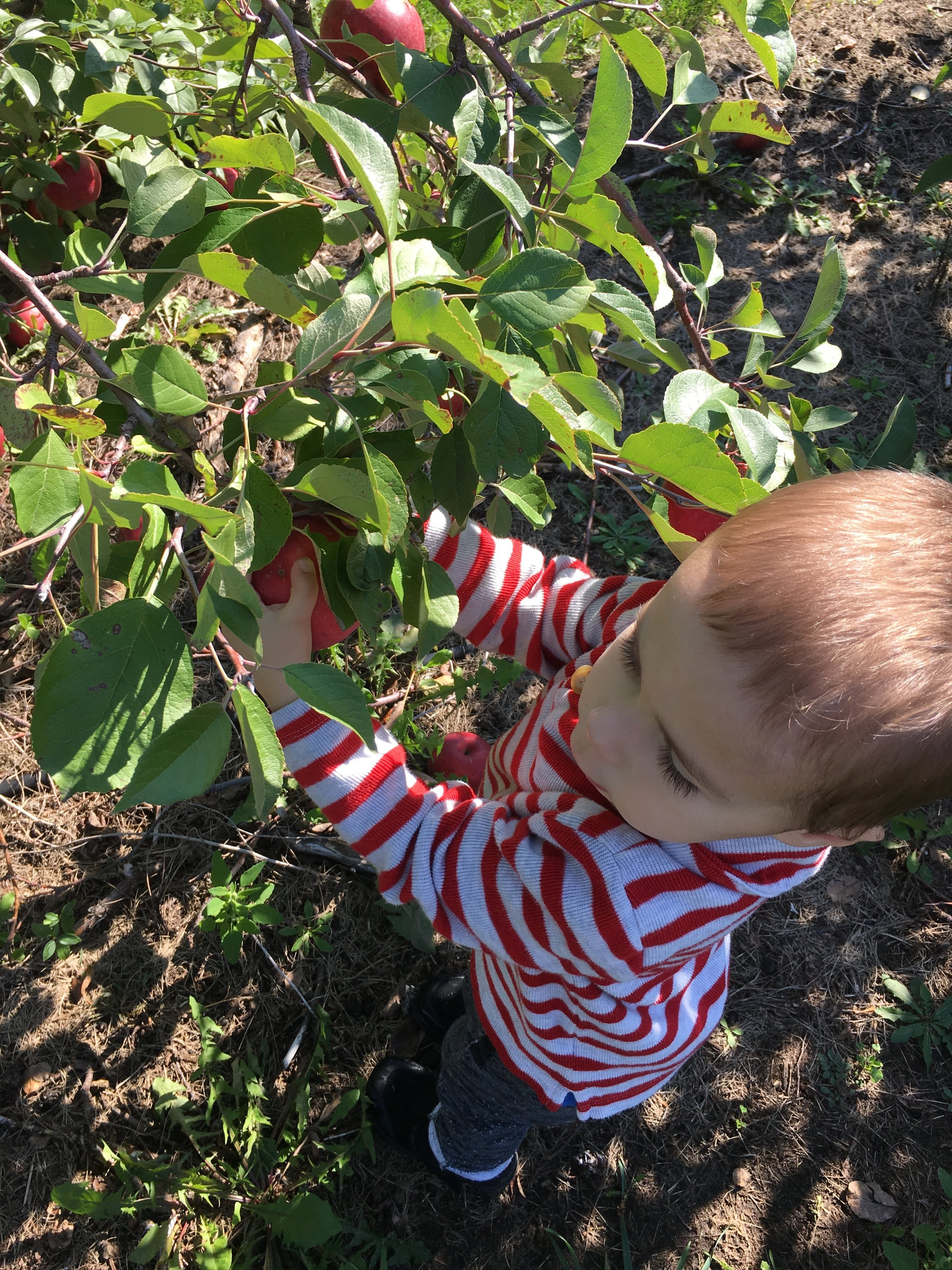 A Trip to the Apple Orchard (IMG_0575)