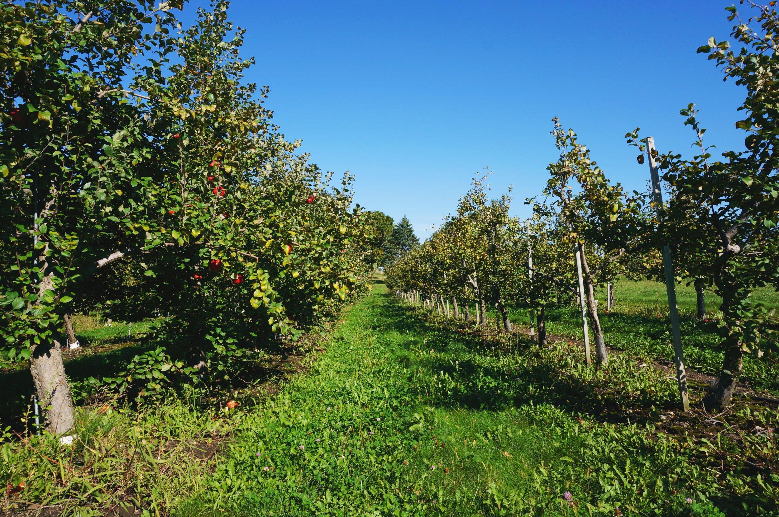 2 Carlsons Orchard.jpg