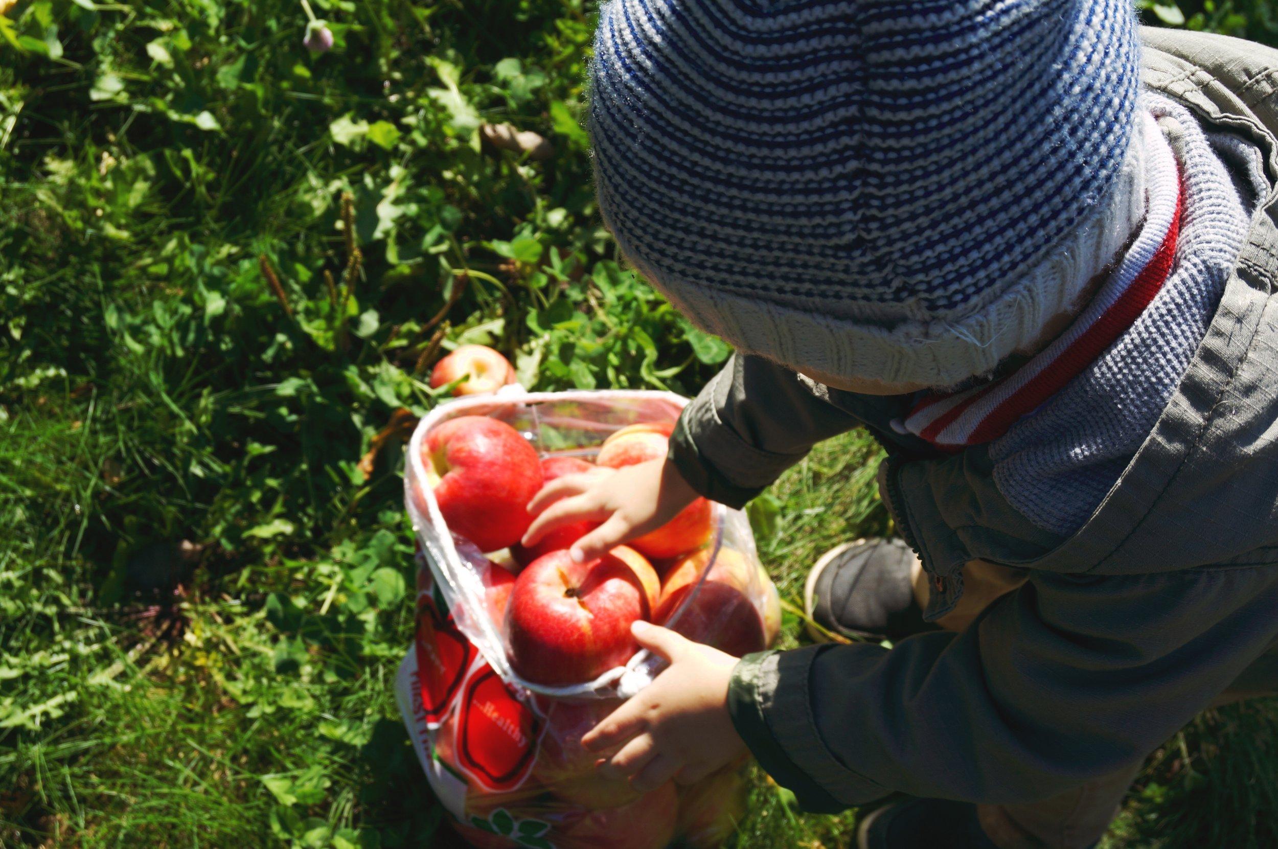 17 Finn bag of apples.jpg